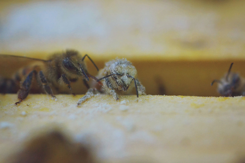 b65e2-hive_varroa_8.jpg