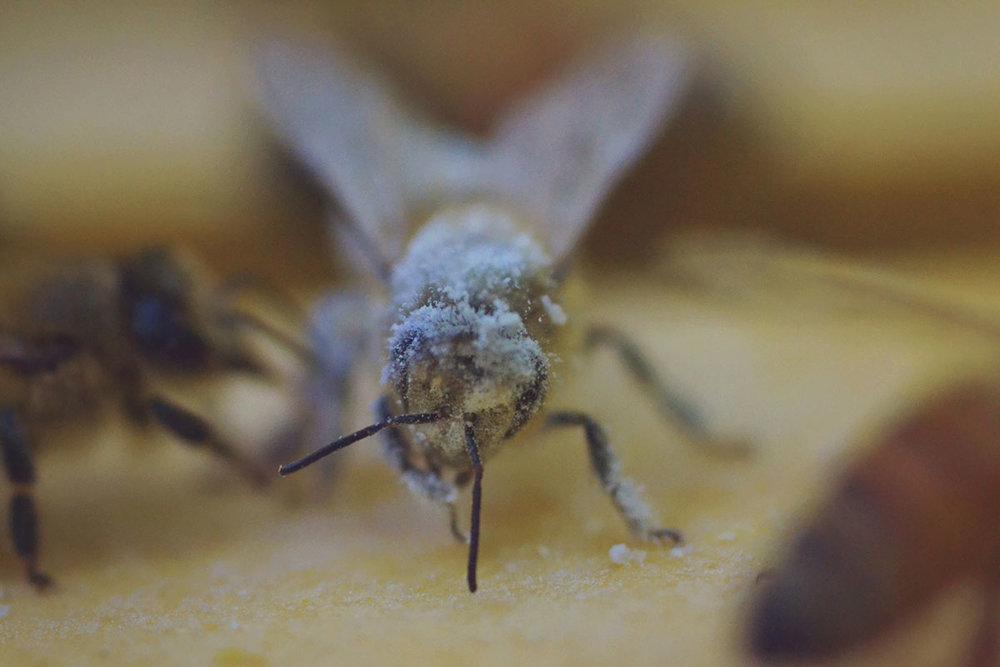 e4d3e-hive_varroa_3.jpg