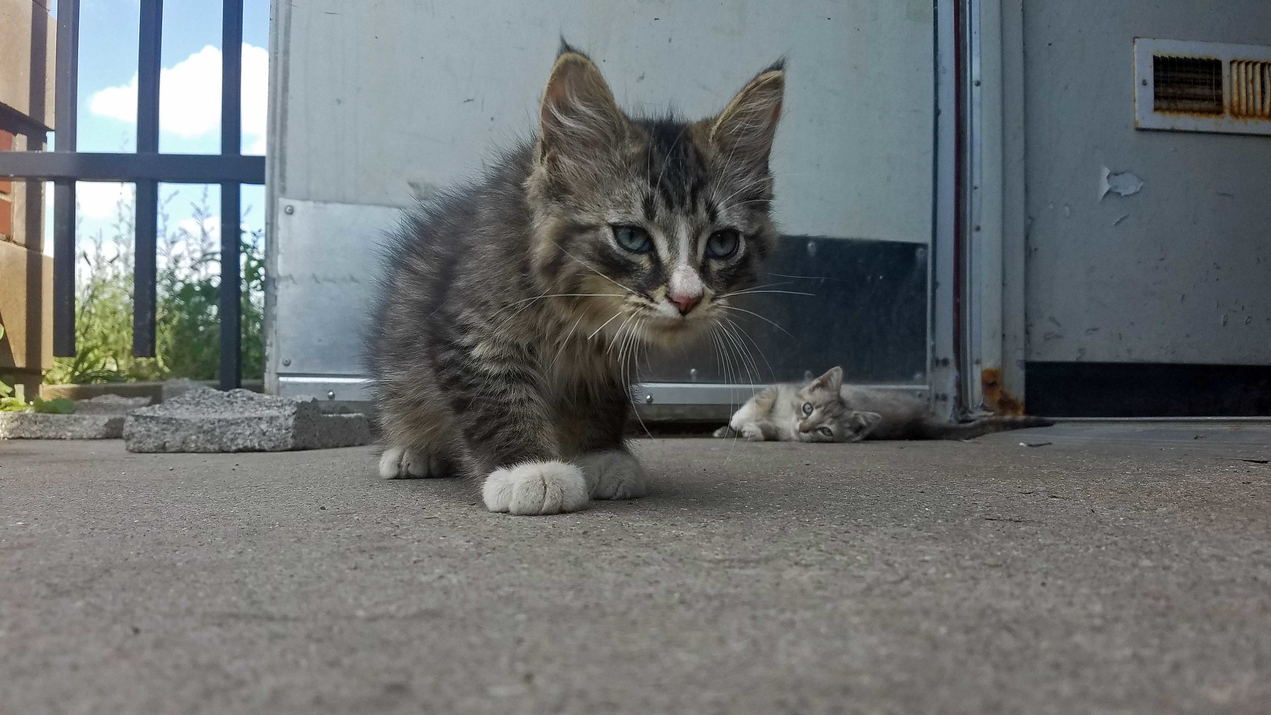 Cats-01-Web.jpg