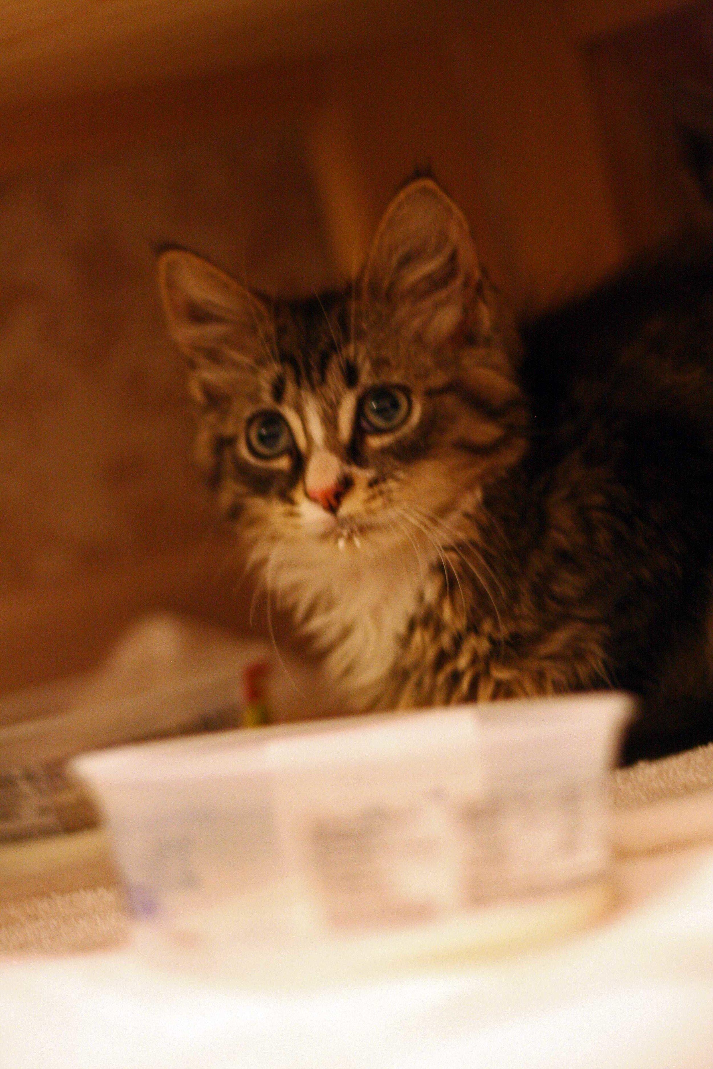Cats-02-Web.jpg