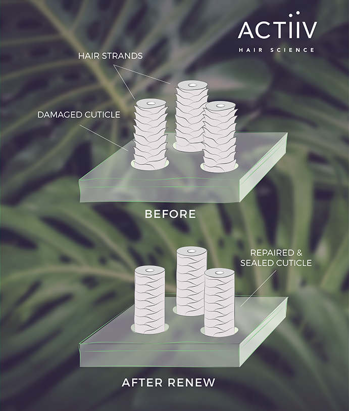 REPAIR & RESTORE - Actiiv isn't just for hair loss. Use Actiiv Renew on clients with over-processed hair. Actiiv Renew shampoo seals the cuticle while increasing the growth rate of hair by up to 40%.