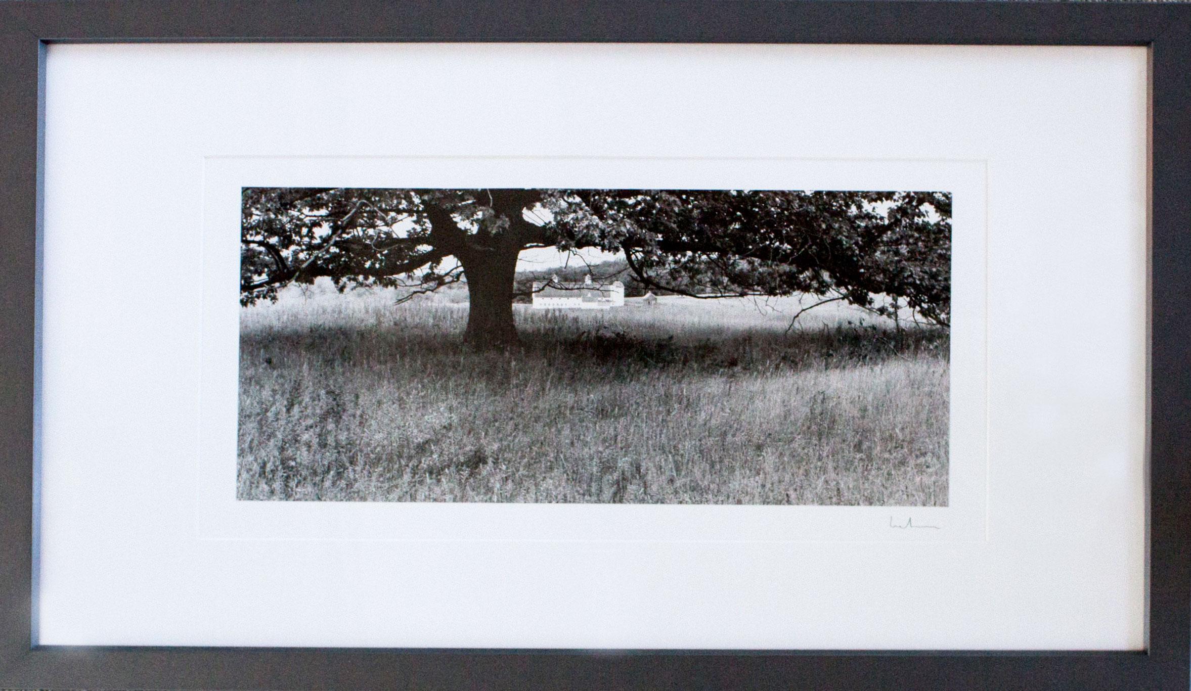 """"""" Oak Tree, Glen Arbor,"""" David Lubbers"""
