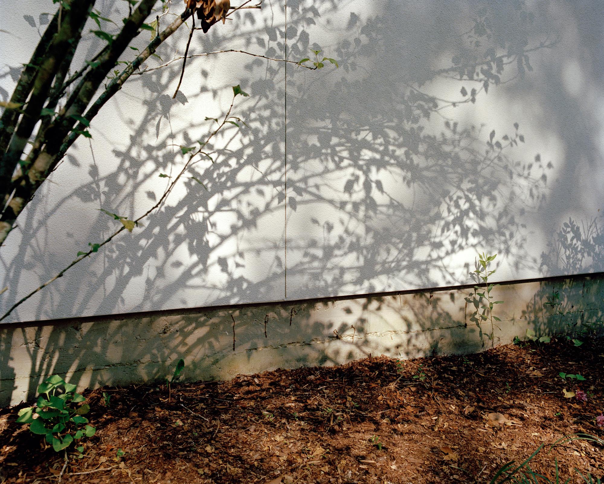 shadowtree-004_Print.jpg