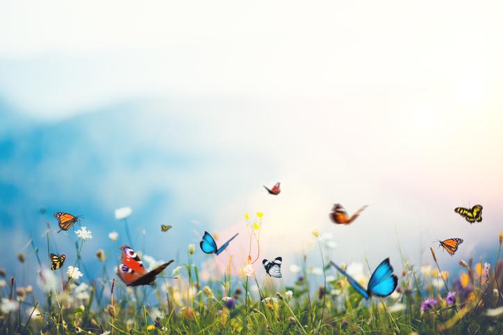 Butterflies -641101106.jpg