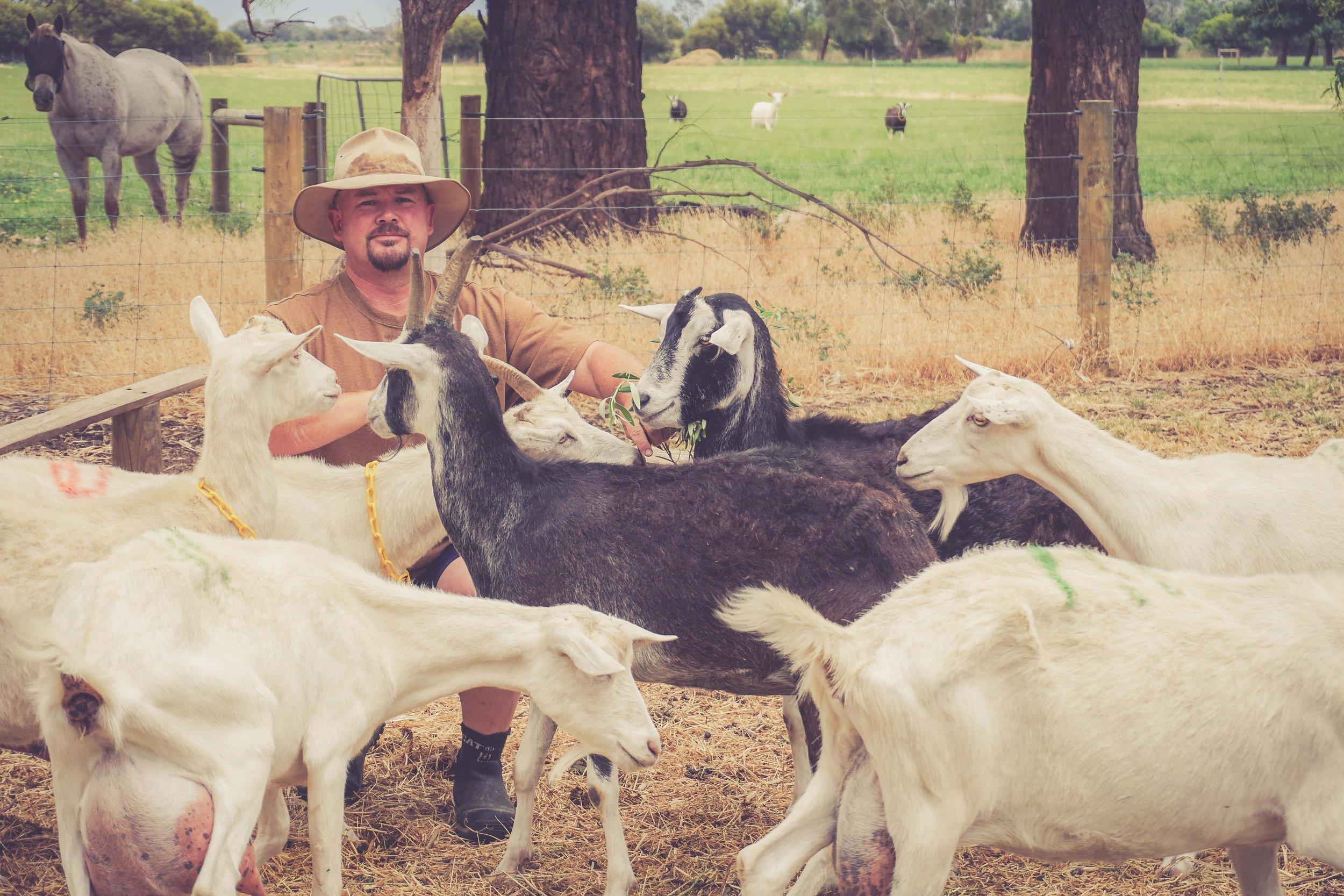 Shayne Mostyn goats.jpg