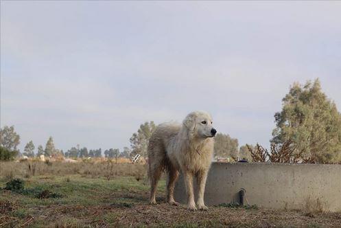 15 acres dog.JPG