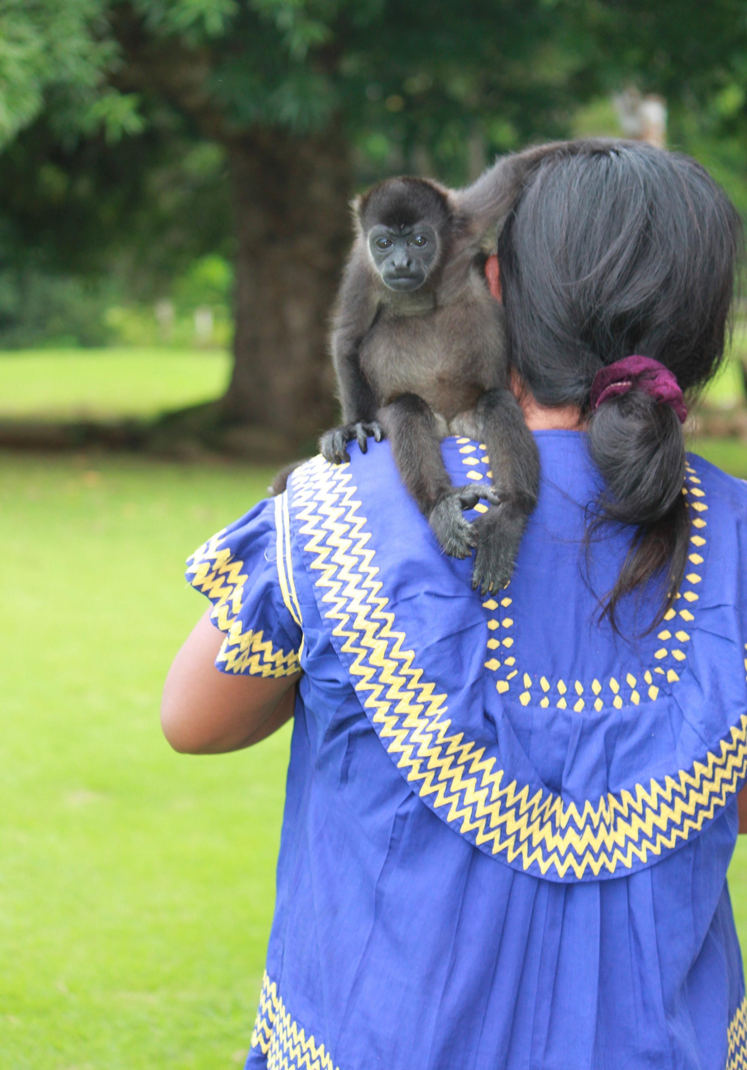 Infant Mantled Howler Monkey: Atlas