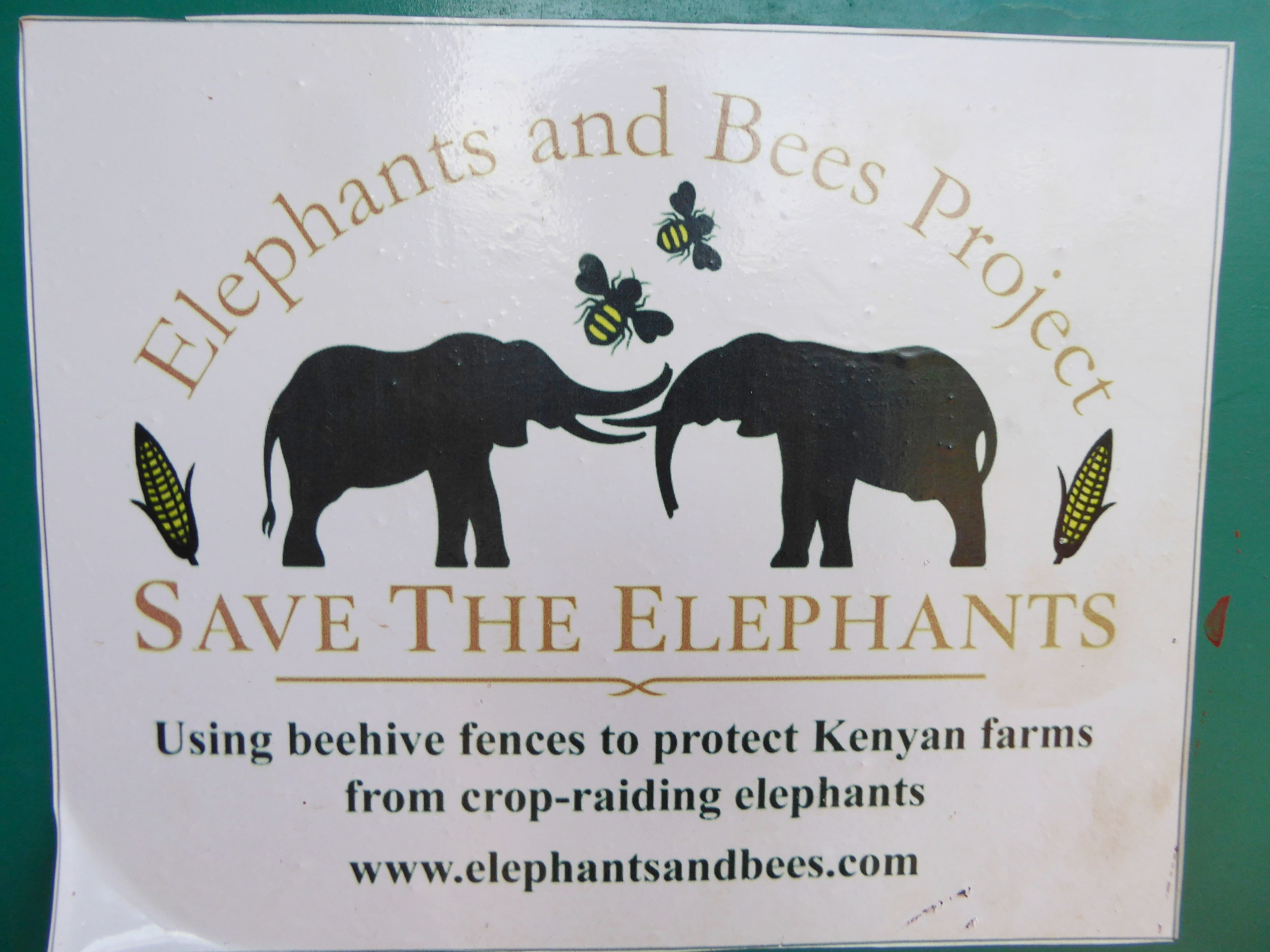 Elephants and Bees Project
