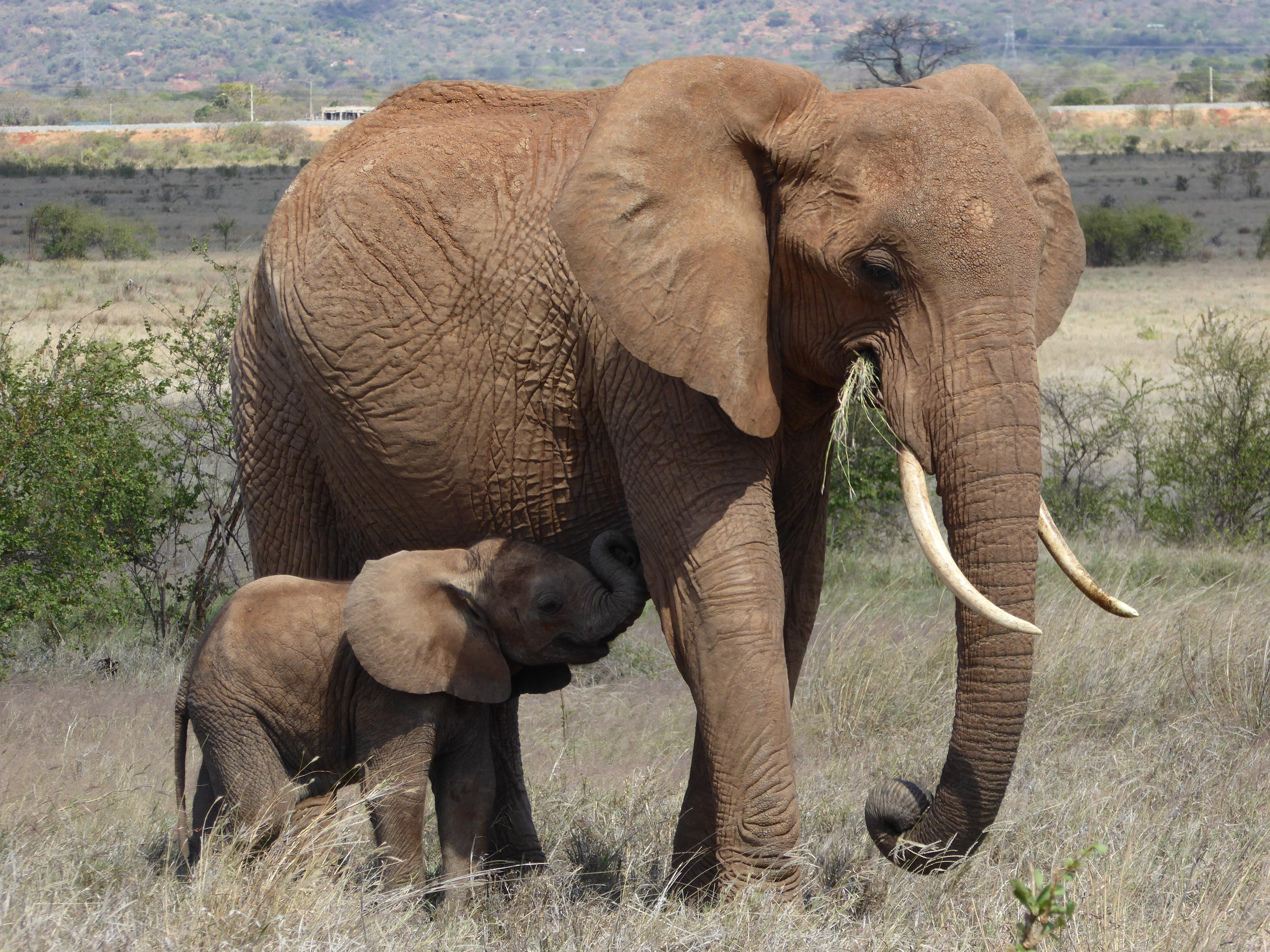 Mother and Her Calf