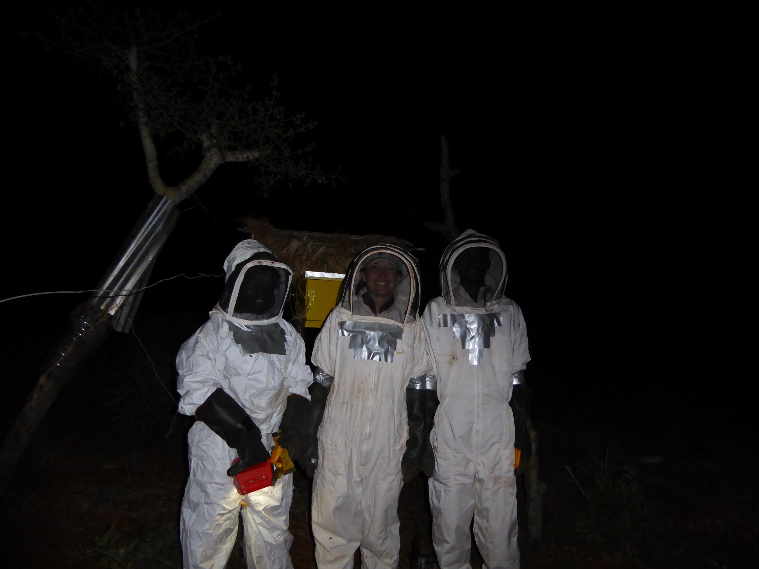 Beehive Night Work