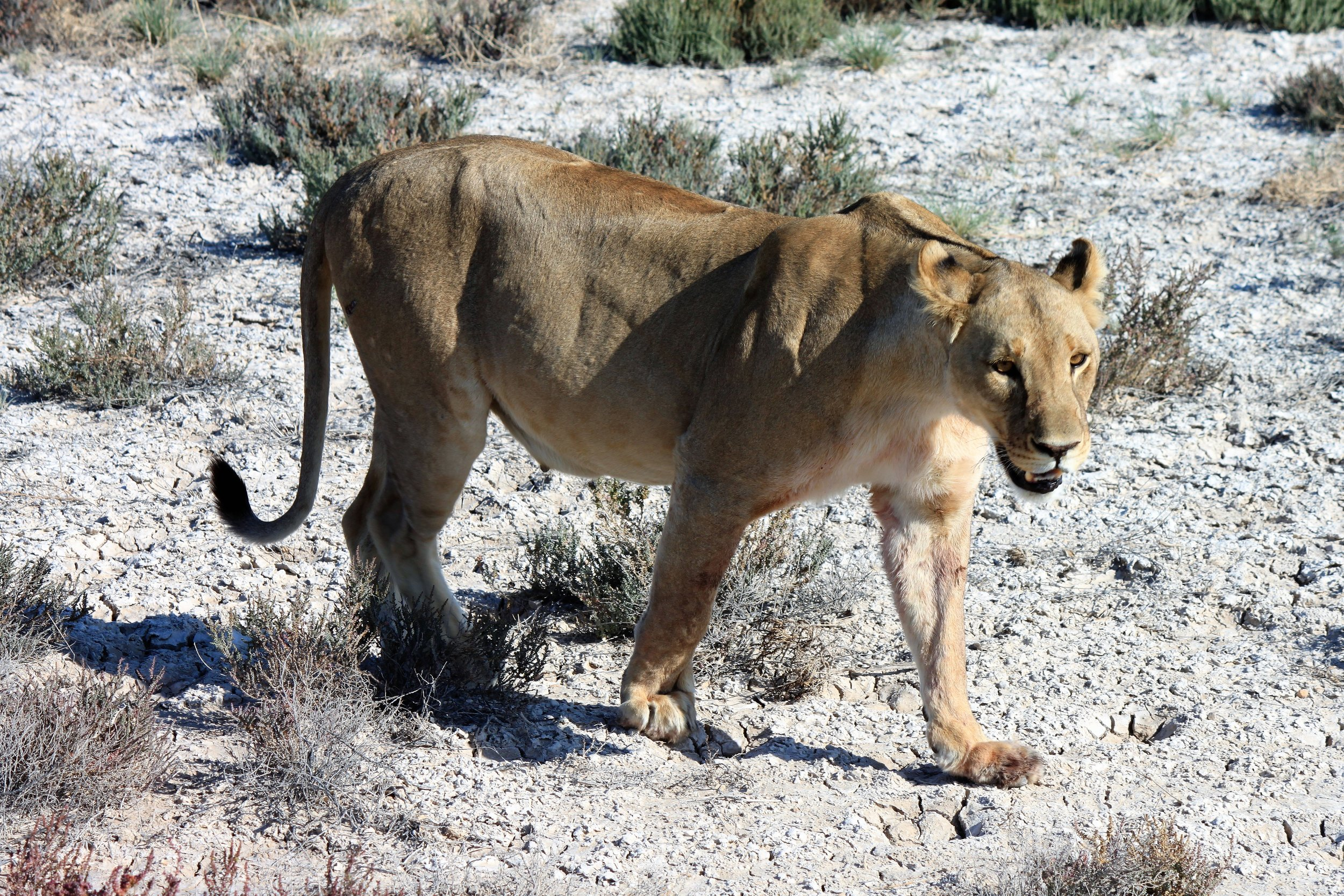 Erindi Game Reserve