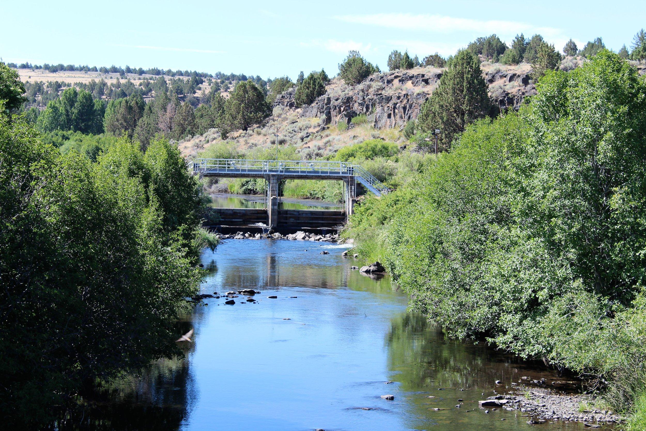 Blitzen River, Carp Trap