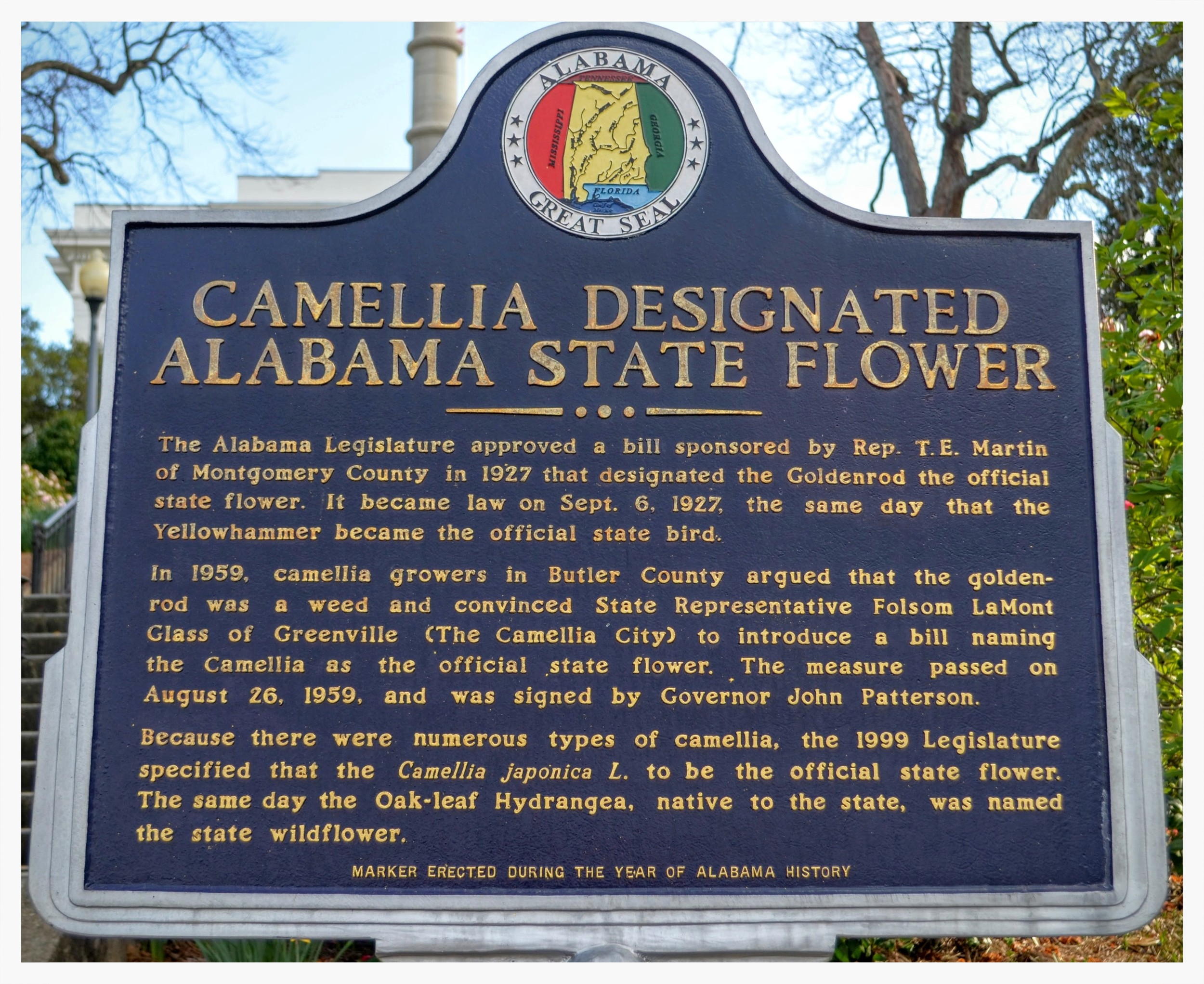 Camellia, State Flower historical marker, Capitol Hill, Montgomery, Montgomery County, Alabama