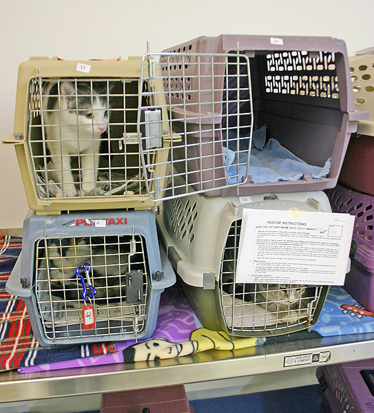 Clinic Station Flow — Feral Cat Spay/Neuter Project