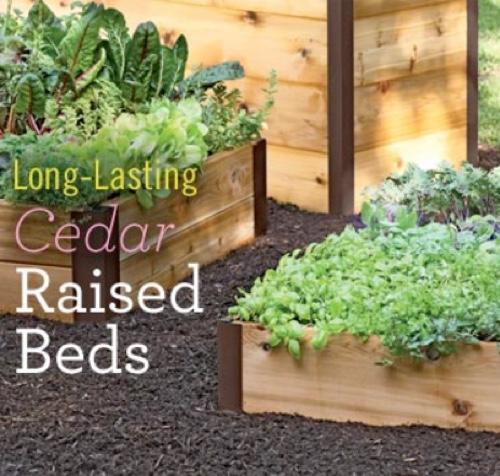 cedar-raised-beds.jpg