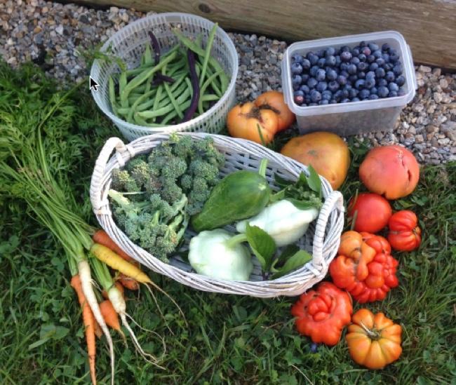 kids vegetable gardens