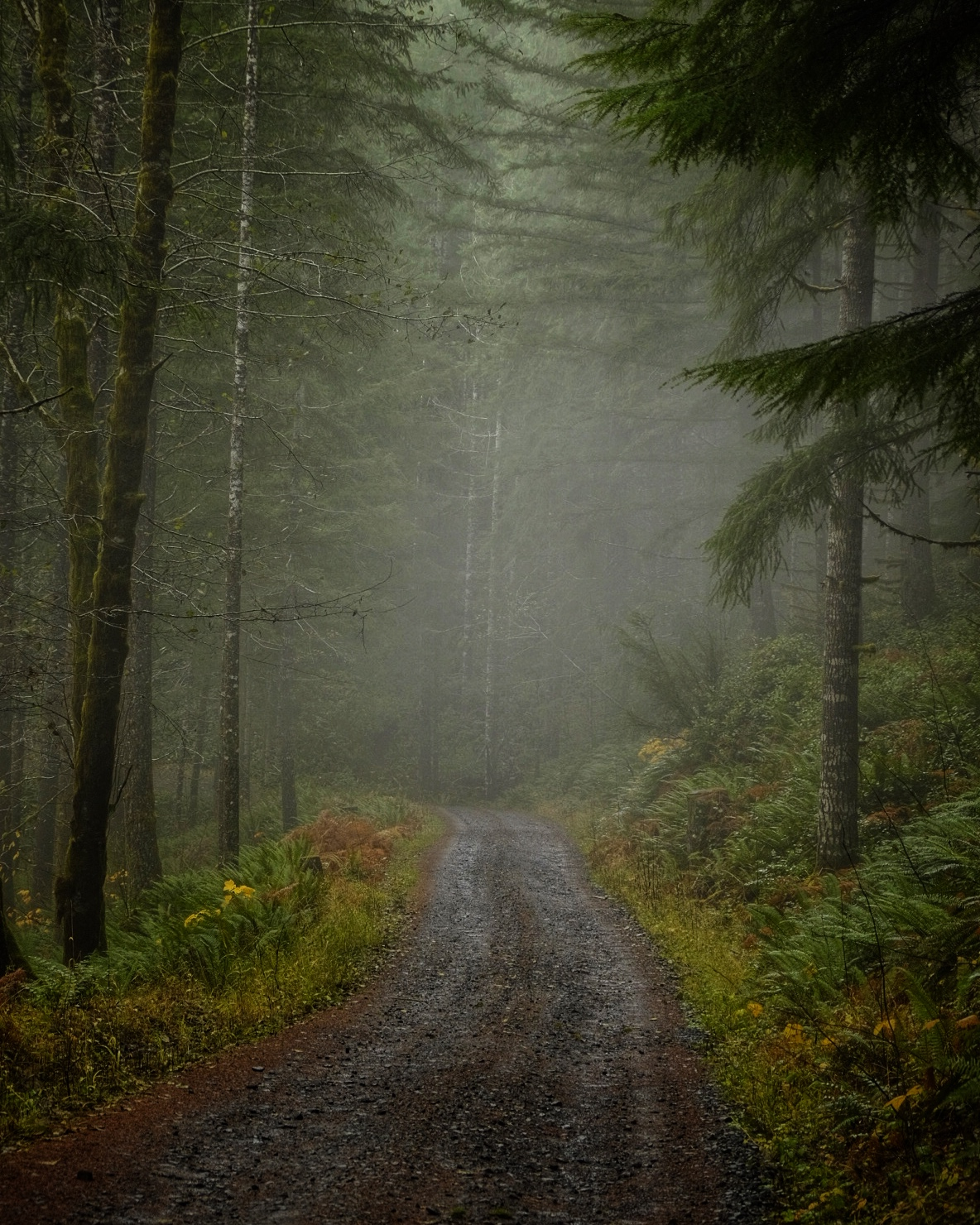 Misty road in Tillamook State Forest