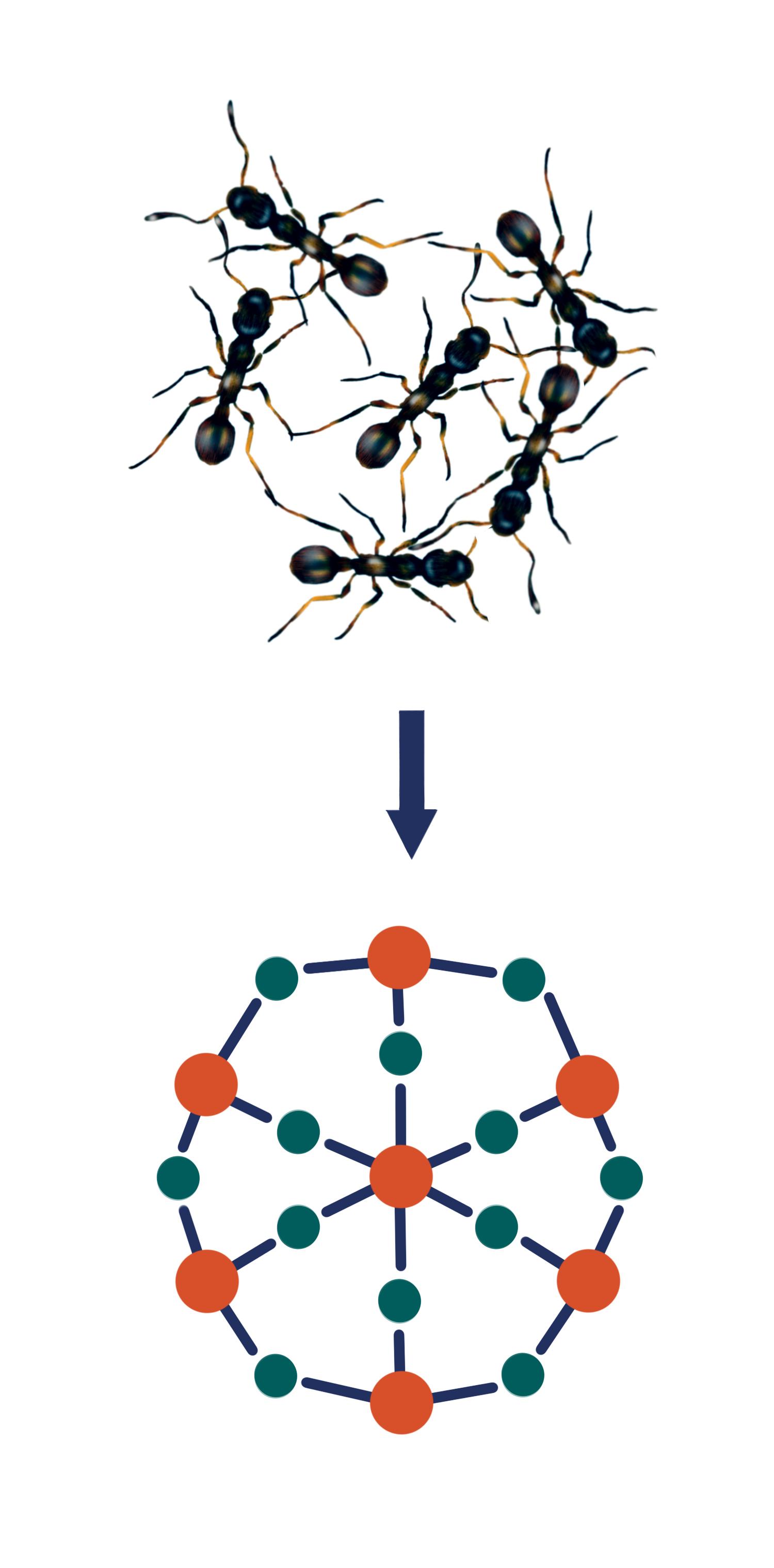 ant_graphic.jpg