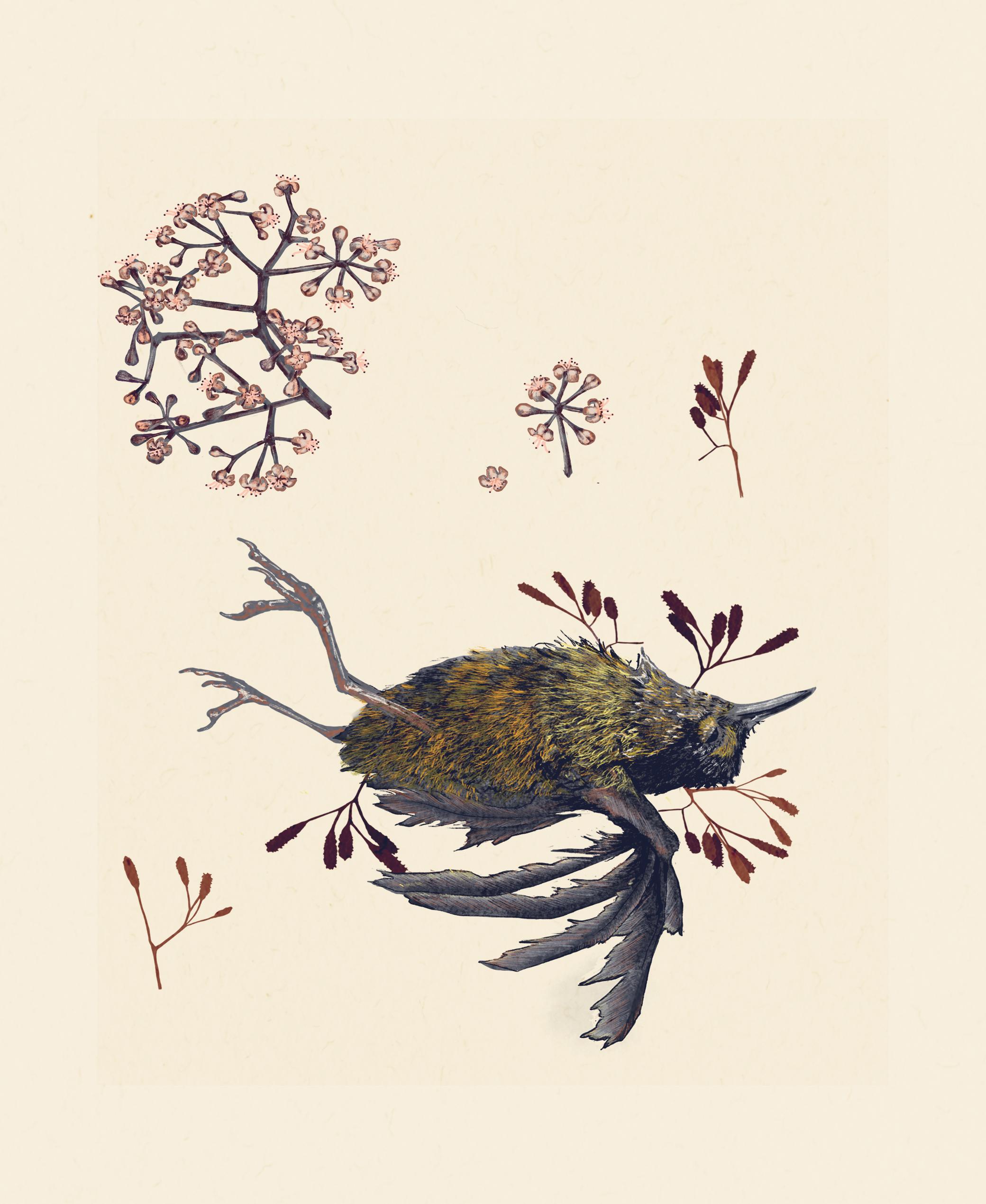 Bird_catcher.jpg