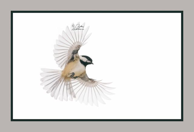 Ethereal Wings (Chickadee)