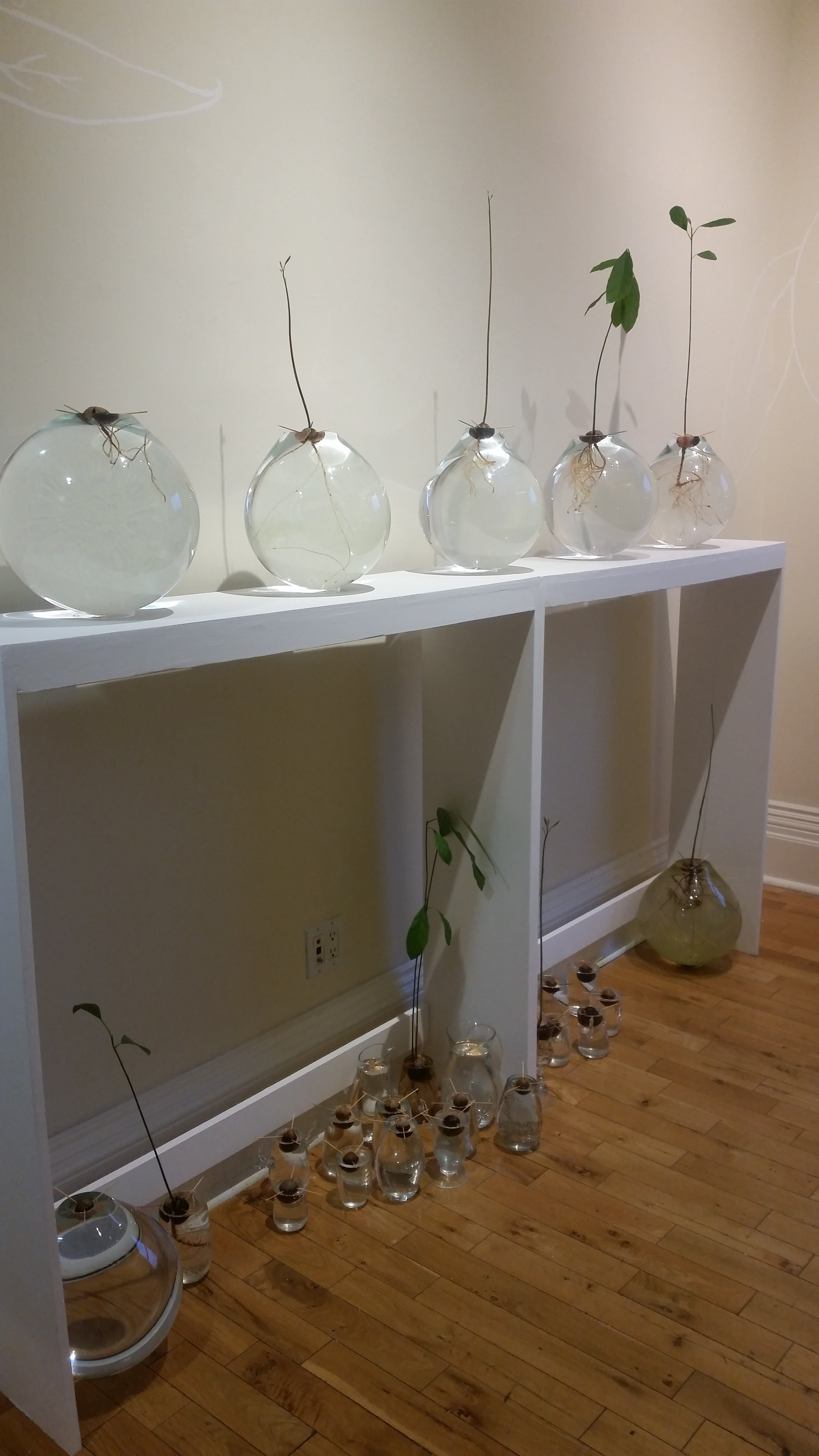 """""""The Avocado Room""""  by glass artist and avocado enthusiast Becky Lauzon"""