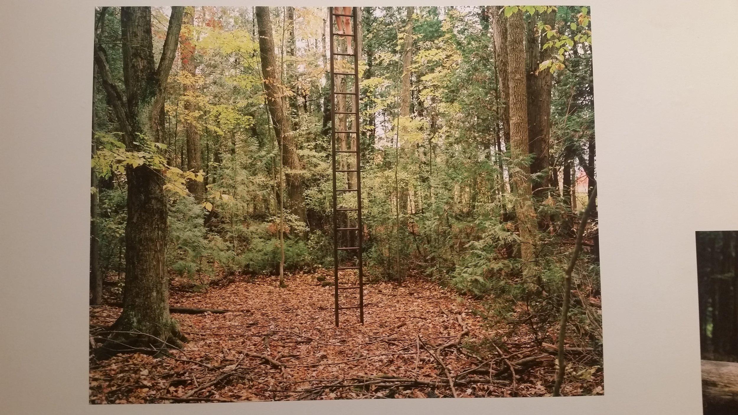 """""""The Woods""""  by Darren Rego"""