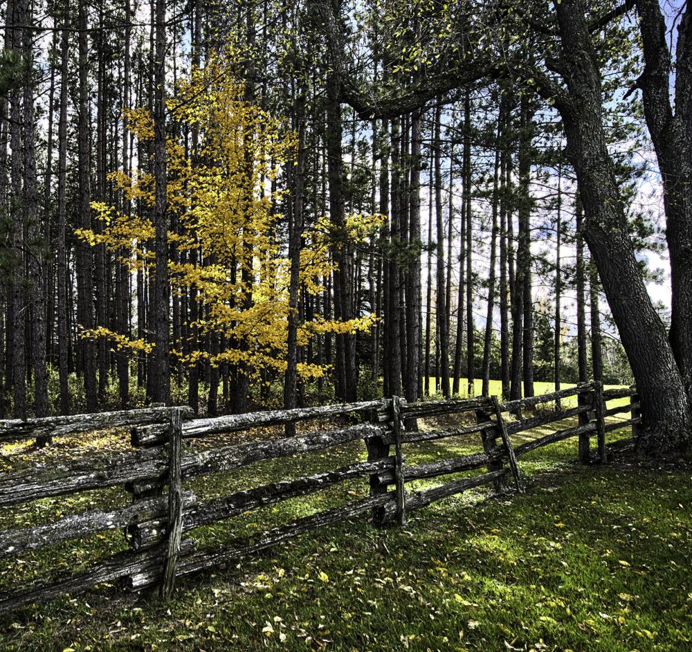 golden maple erin_HDR4.jpg