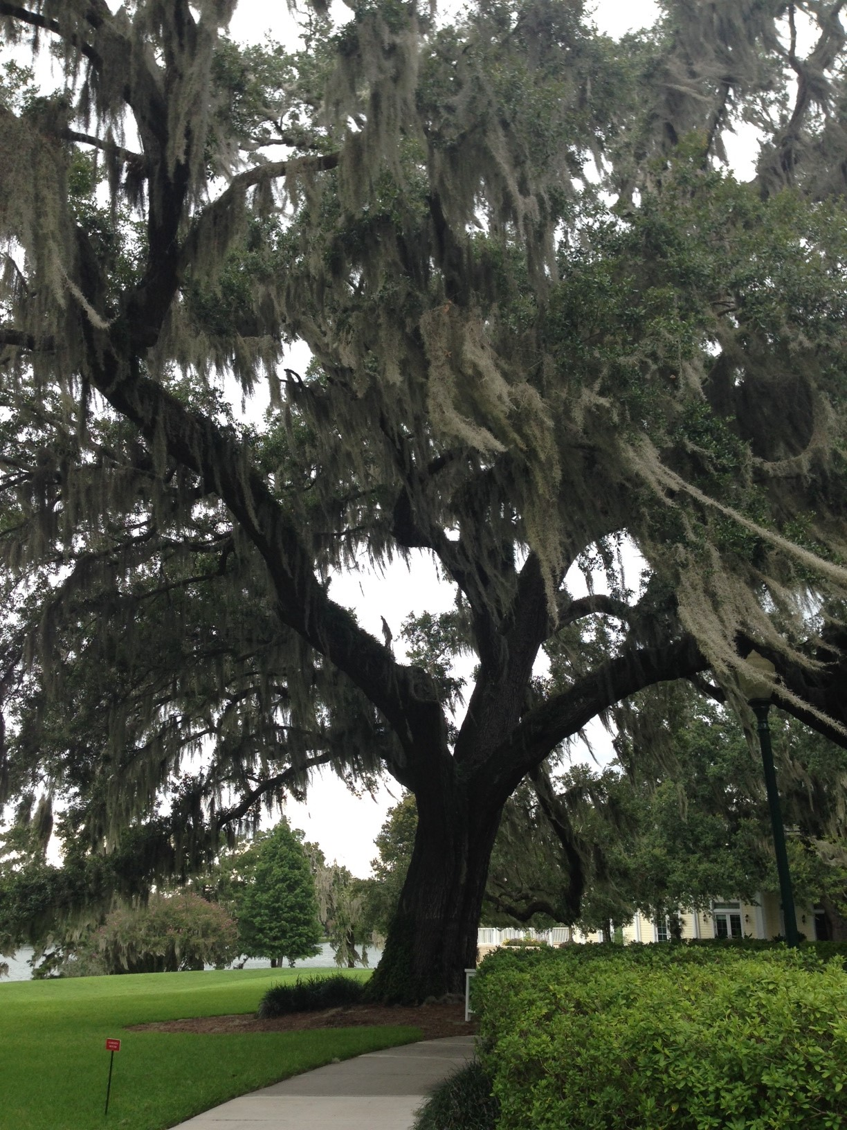 Beautiful-Mature-Tree.jpg