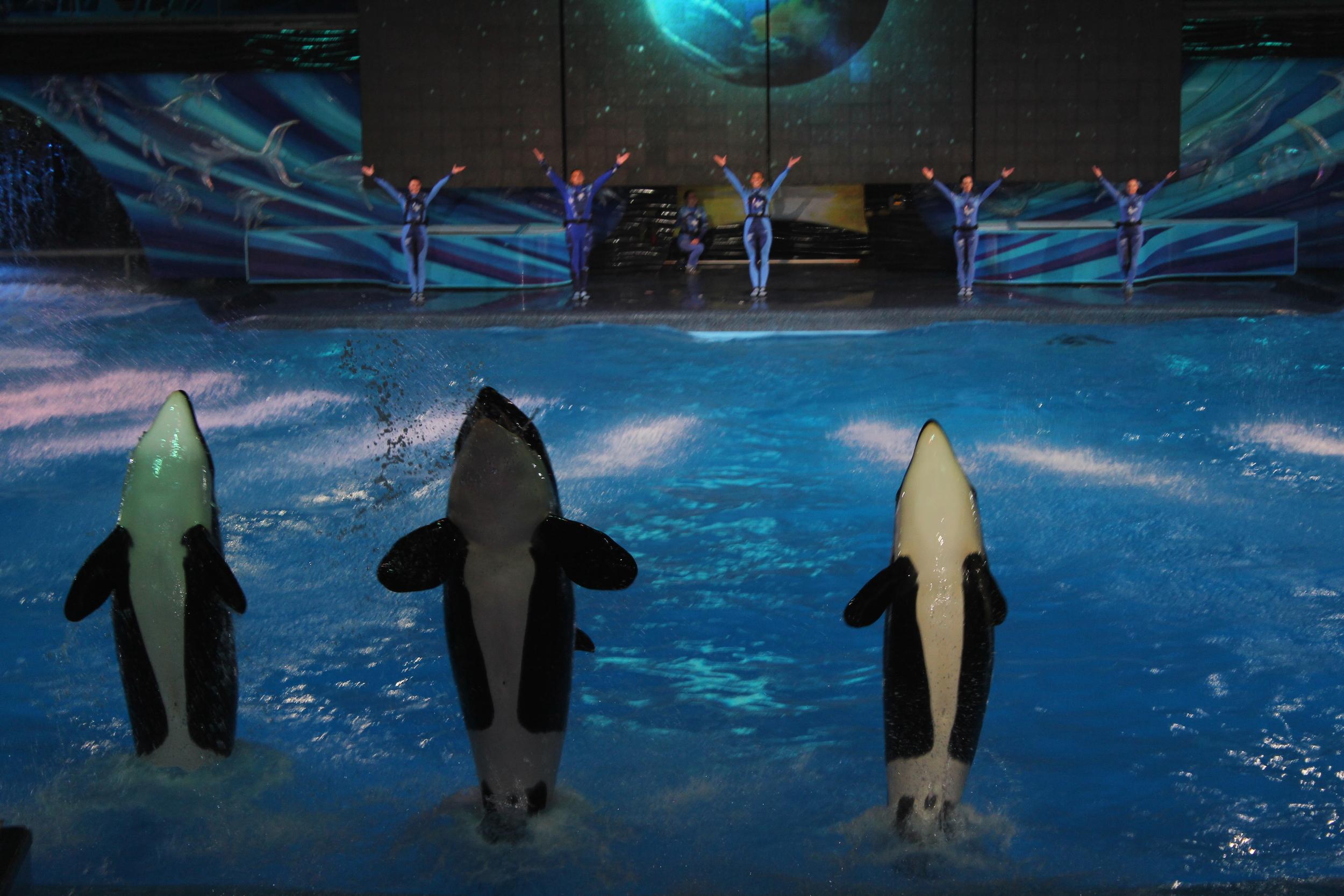 Orca-show.jpg