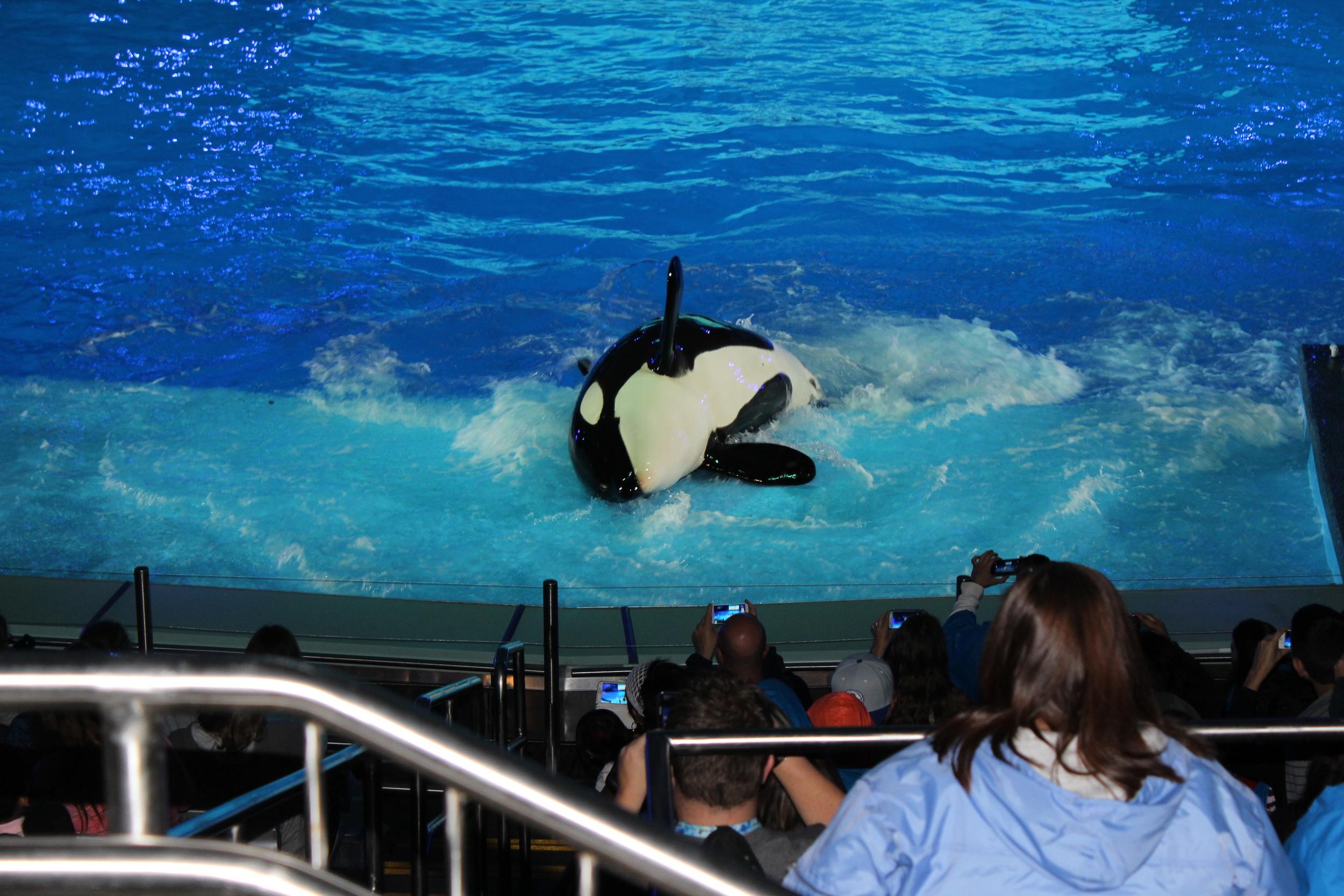 Orca-show-2-1.jpg