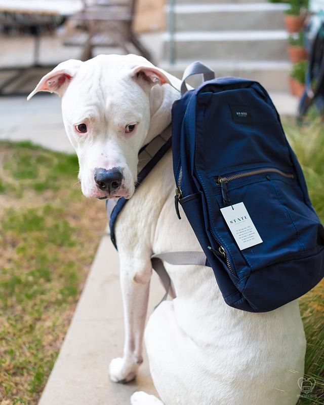 Our brand ambassador, Franklin, would like to help us in thanking @statebags for their extremely generous backpack donation! This incredible donation helps us provide all our recipients with a durable, high quality backpack to house their food and hygiene supplies. Let's hear it for @statebags! 👏🏽