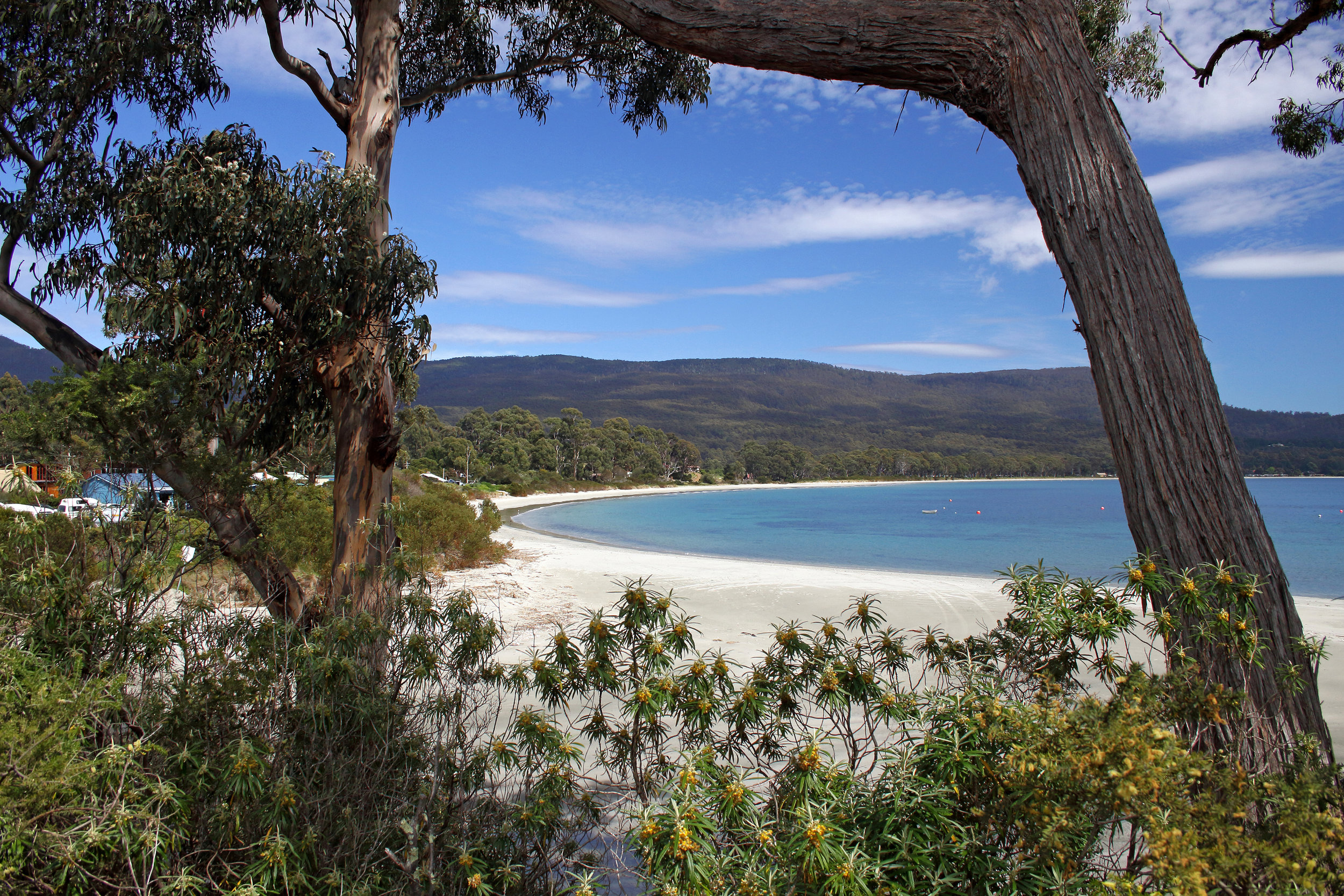 - The core breeding habitat of the Critically Endangered Swift Parrot. The birds nest in hollows of old trees, that may take years to grow, and feed on local flowering trees. They cannot breed successfully without their co-occurring tree hollow and flowering forest.Bruny Island also supports internationally important habitat for the Endangered Forty-spotted Pardalote and a suite of other threatened flora and fauna.