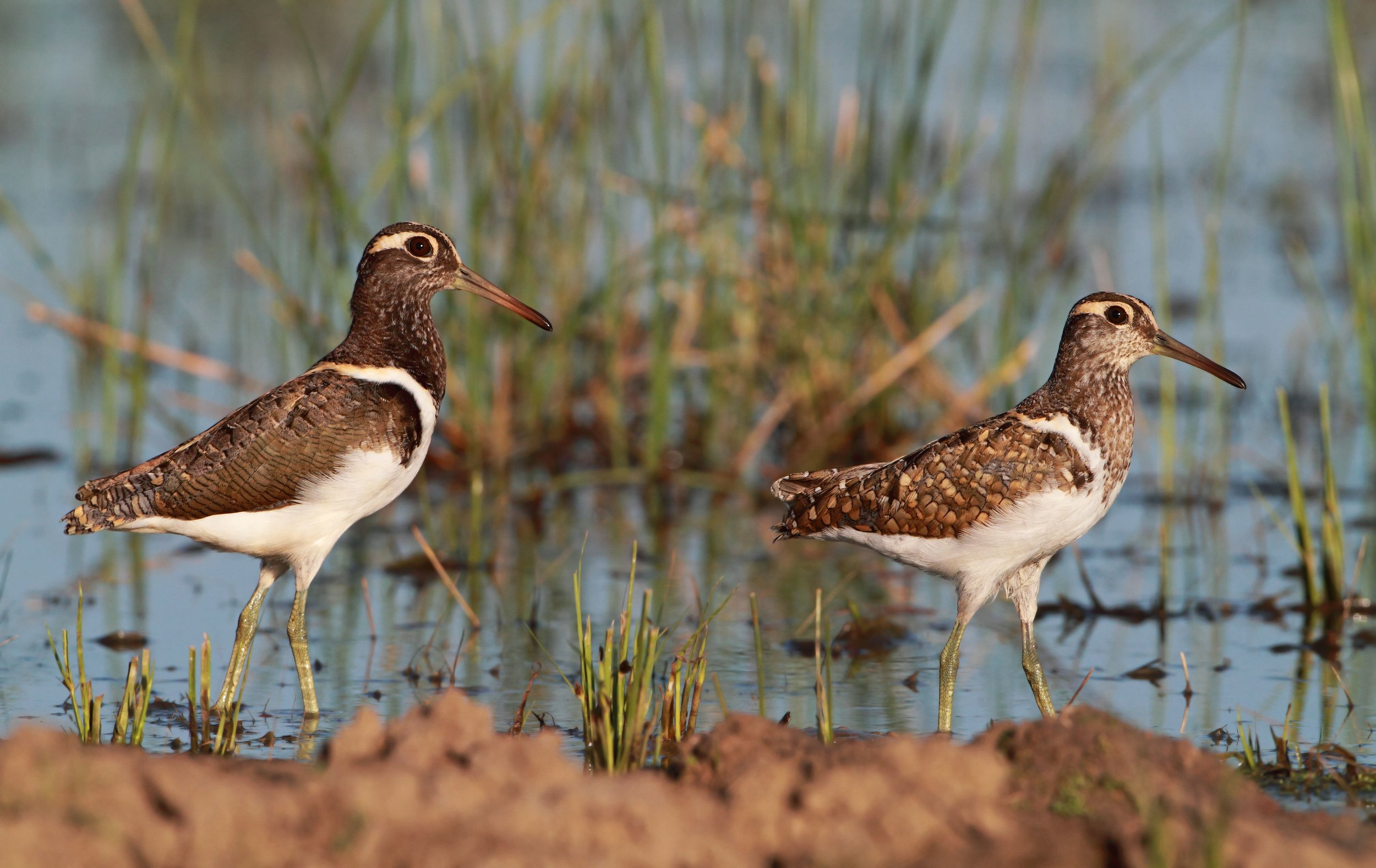 - Birdlife is calling on the Australian Government to deliver the full amount of environmental water committed in plan on time.