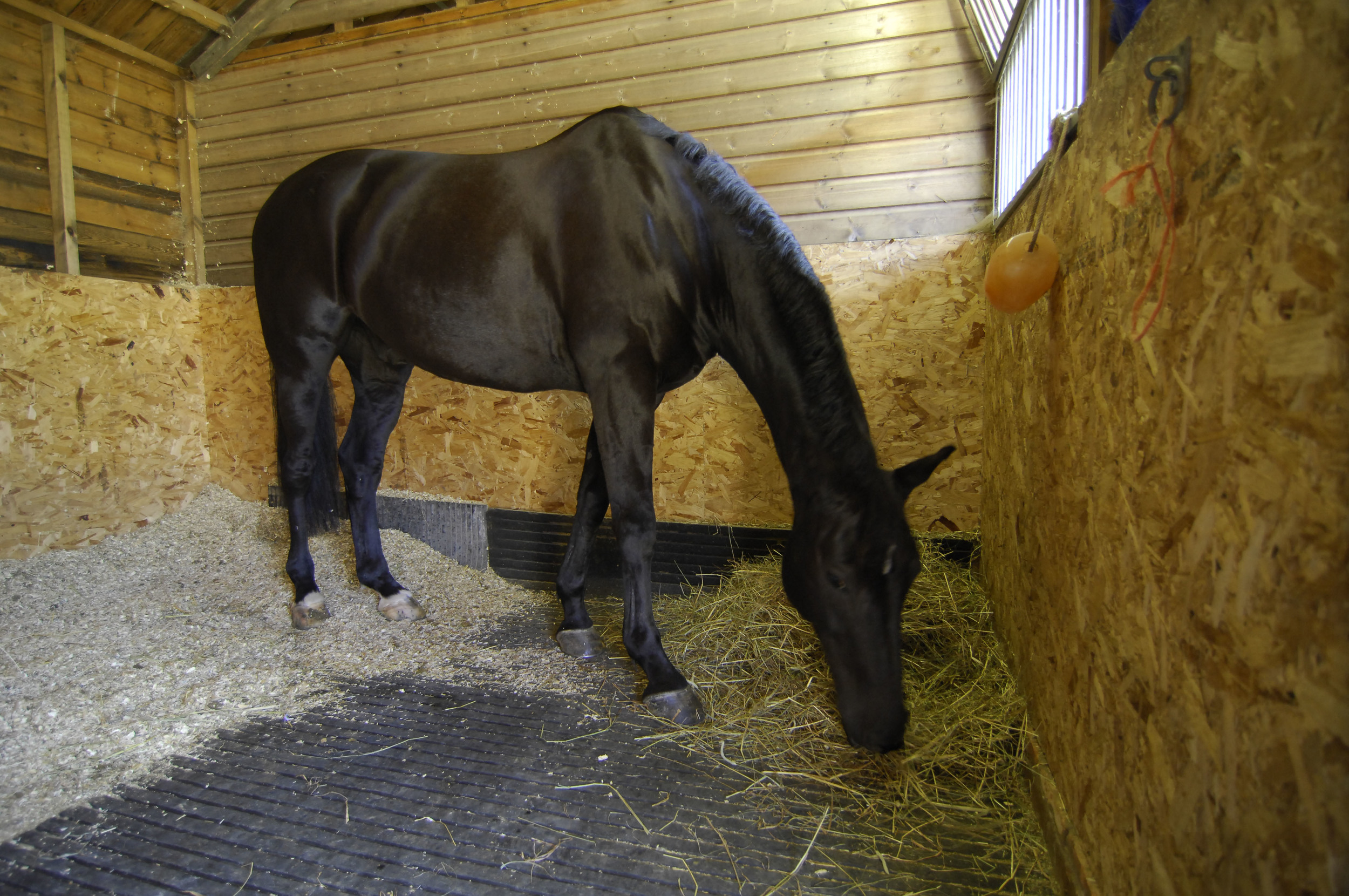 Forage should form the largest part of your horse or pony's diet