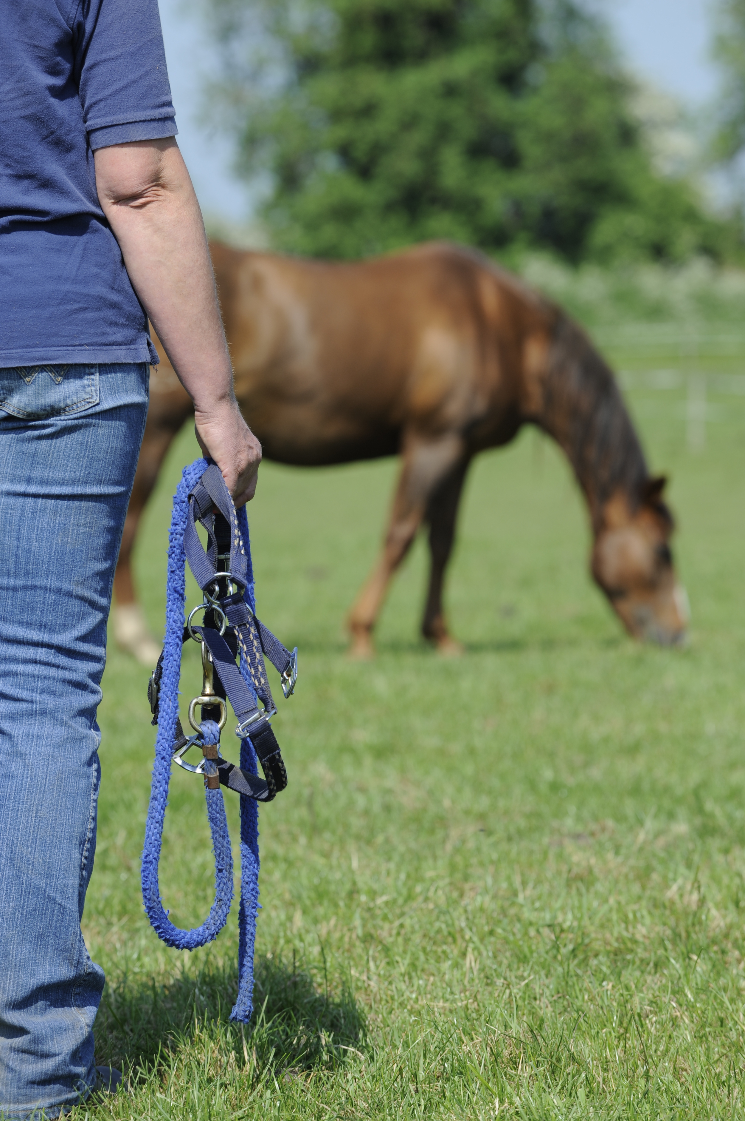 It's important to work out why your horse doesn't want to be caught.