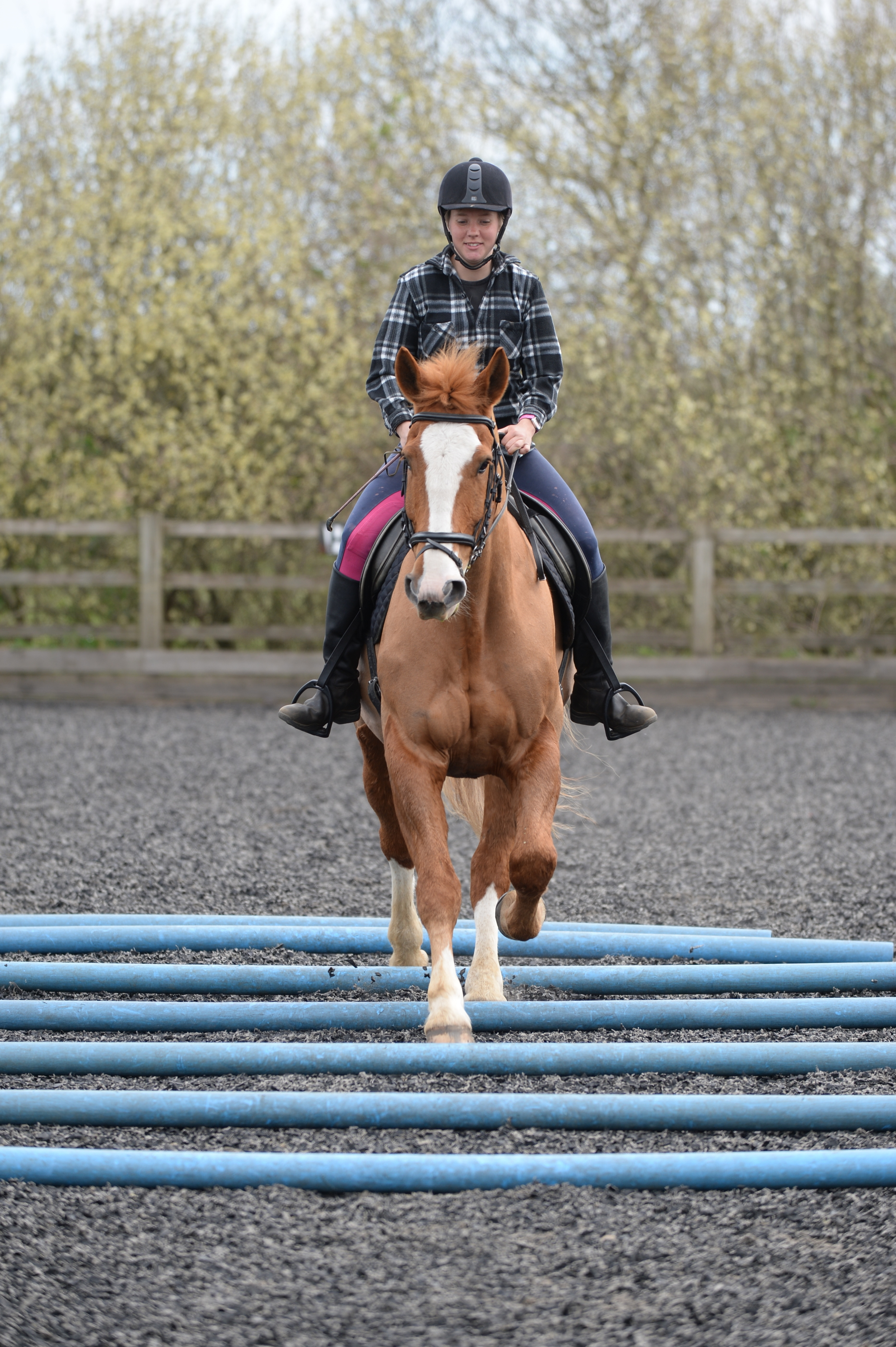 To engage your horse's core for longer periods of time ask your friend to add more poles to the line - to a maximum of seven