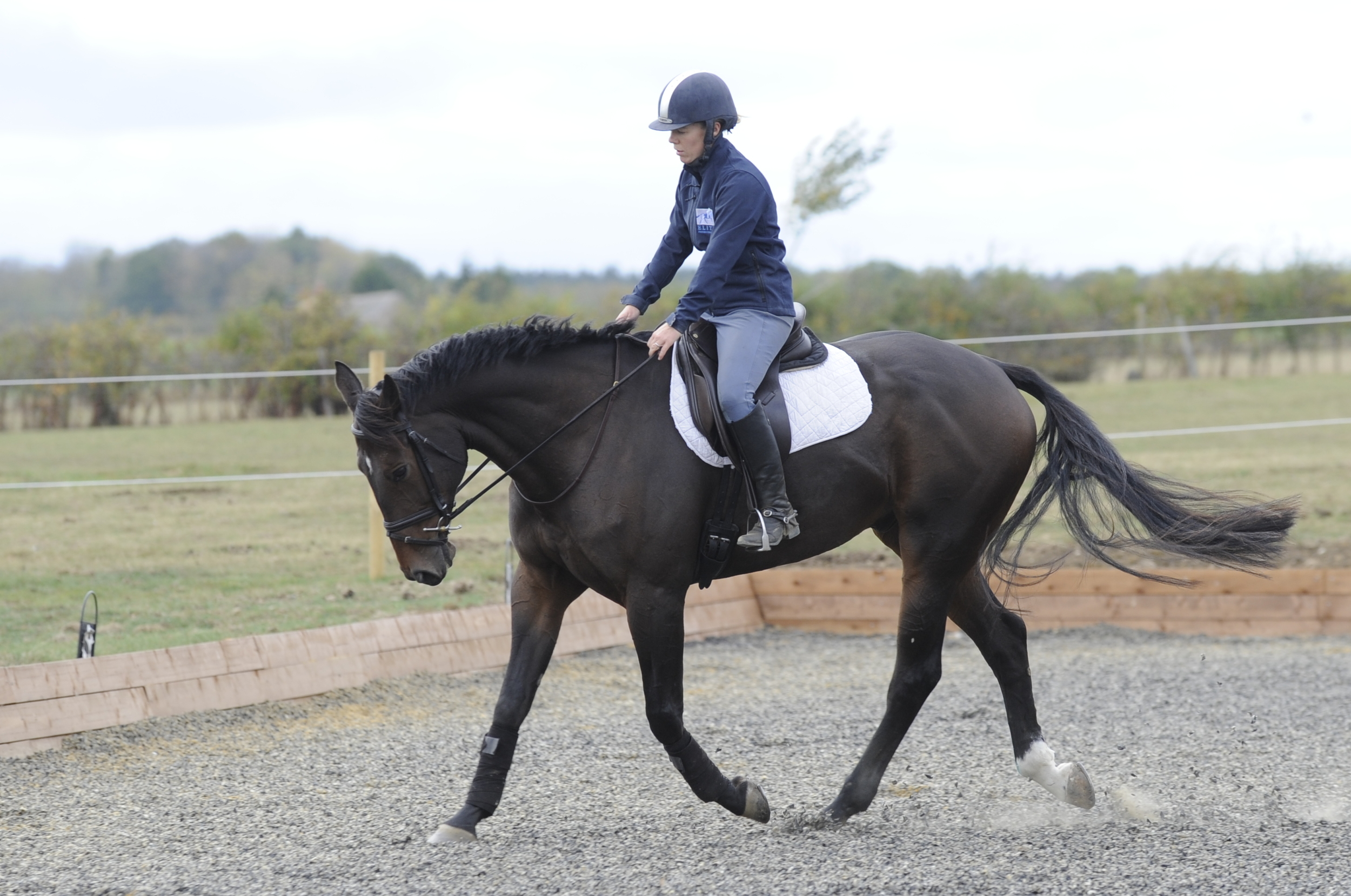 Allowing your horse to open his frame will stretch the muscles along his neck and back