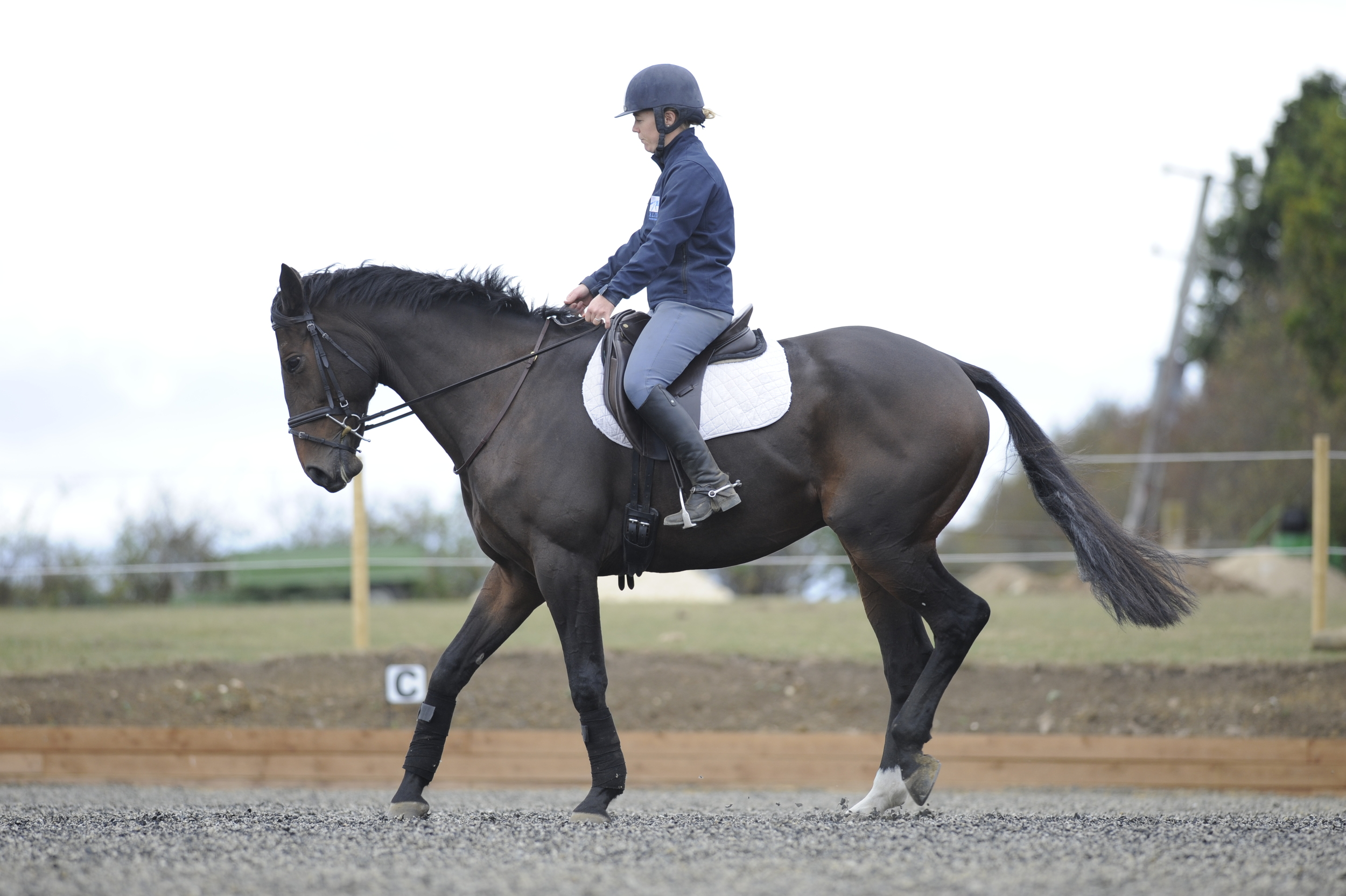 To ask your horse to rein-back, lighten your seat, bring your lower leg back slightly and apply even pressure on the rein