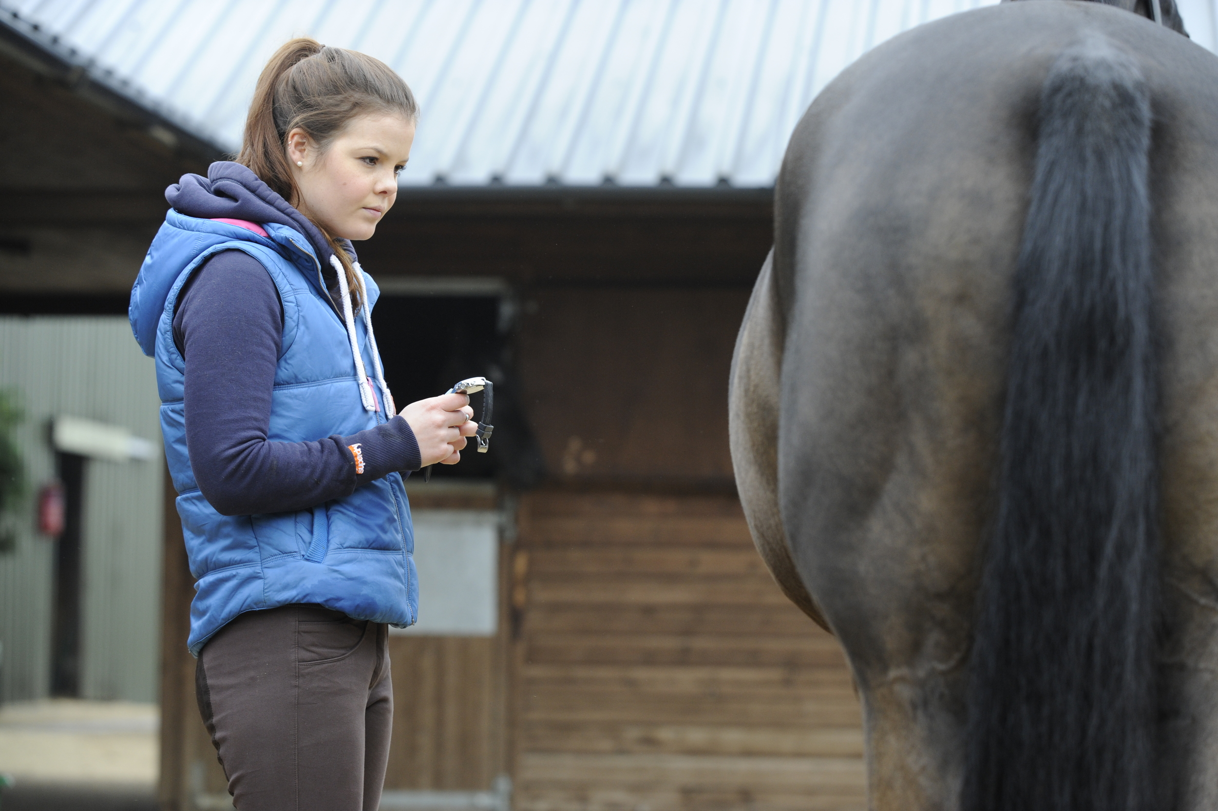 To check your horse's respiration rate you'll need to stand to the side of him, a few feet away and watch his ribcage rising and falling