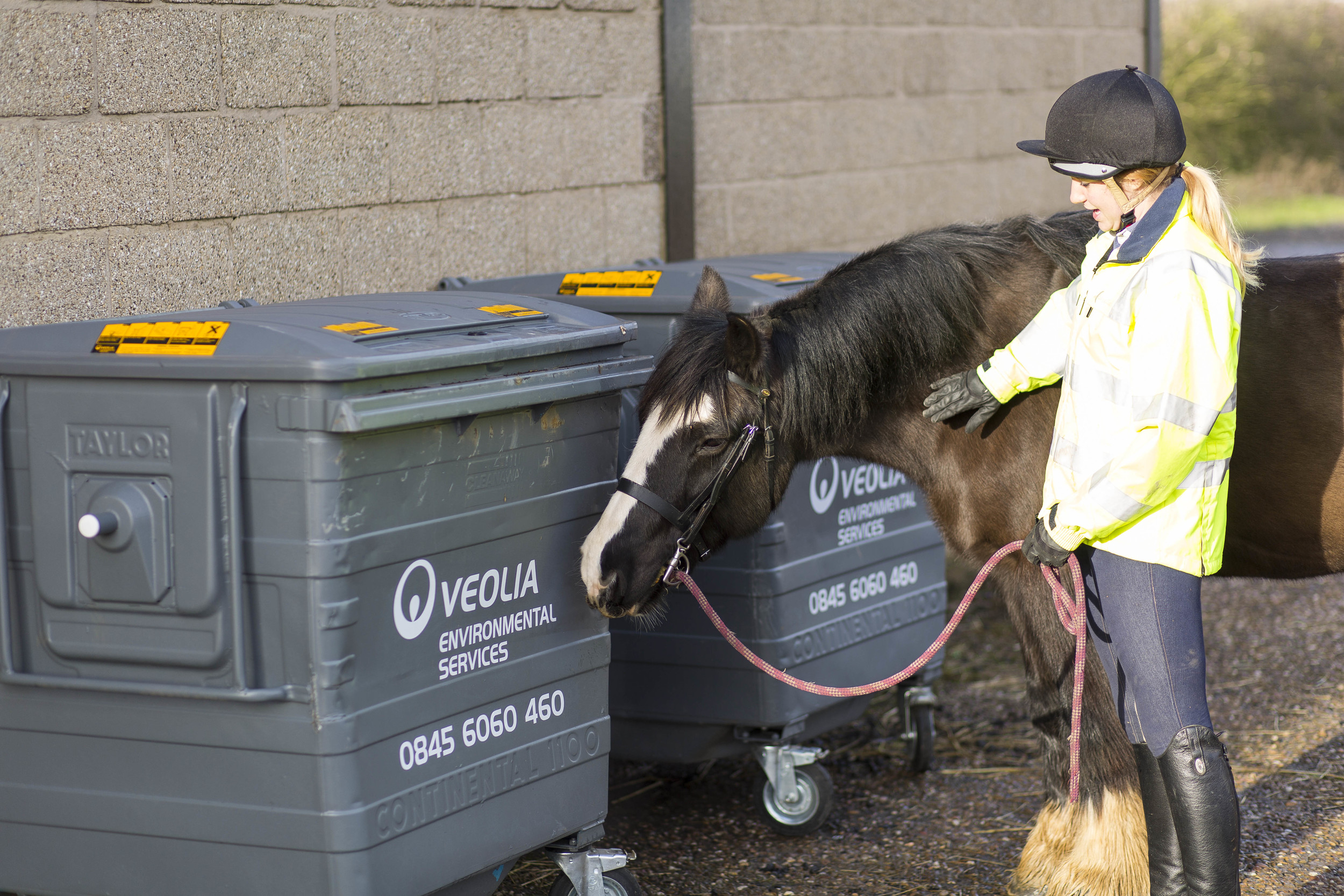 Introduce your horse to objects he might find on his hacks, such as wheelie bins, road signs etc. and encourage him to touch them in a safe and calm environment.