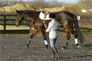 Long-reining should only be attempted by a confident handler