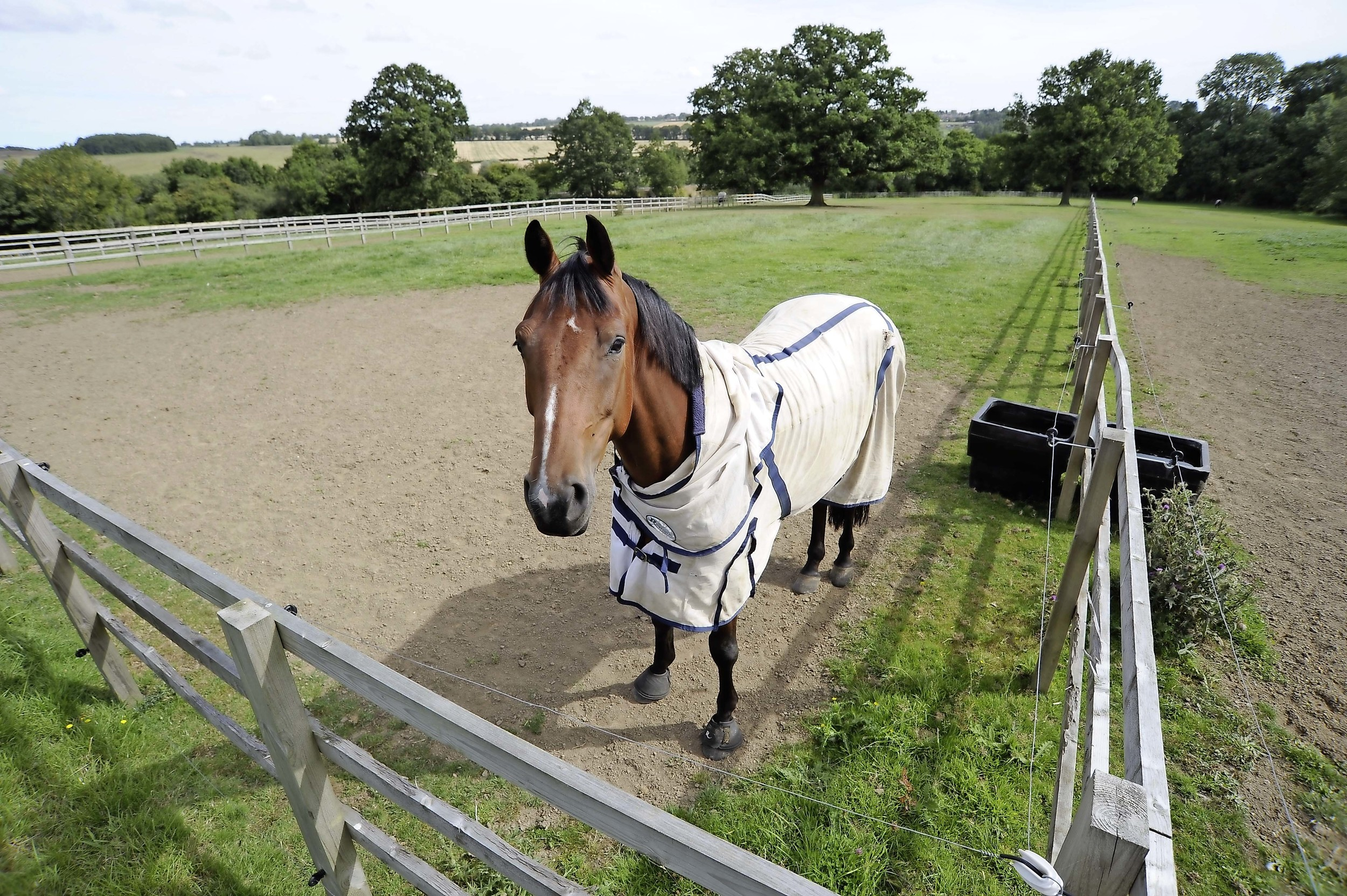 If your horse escapes from his field you'll need to claim ownership within four working days