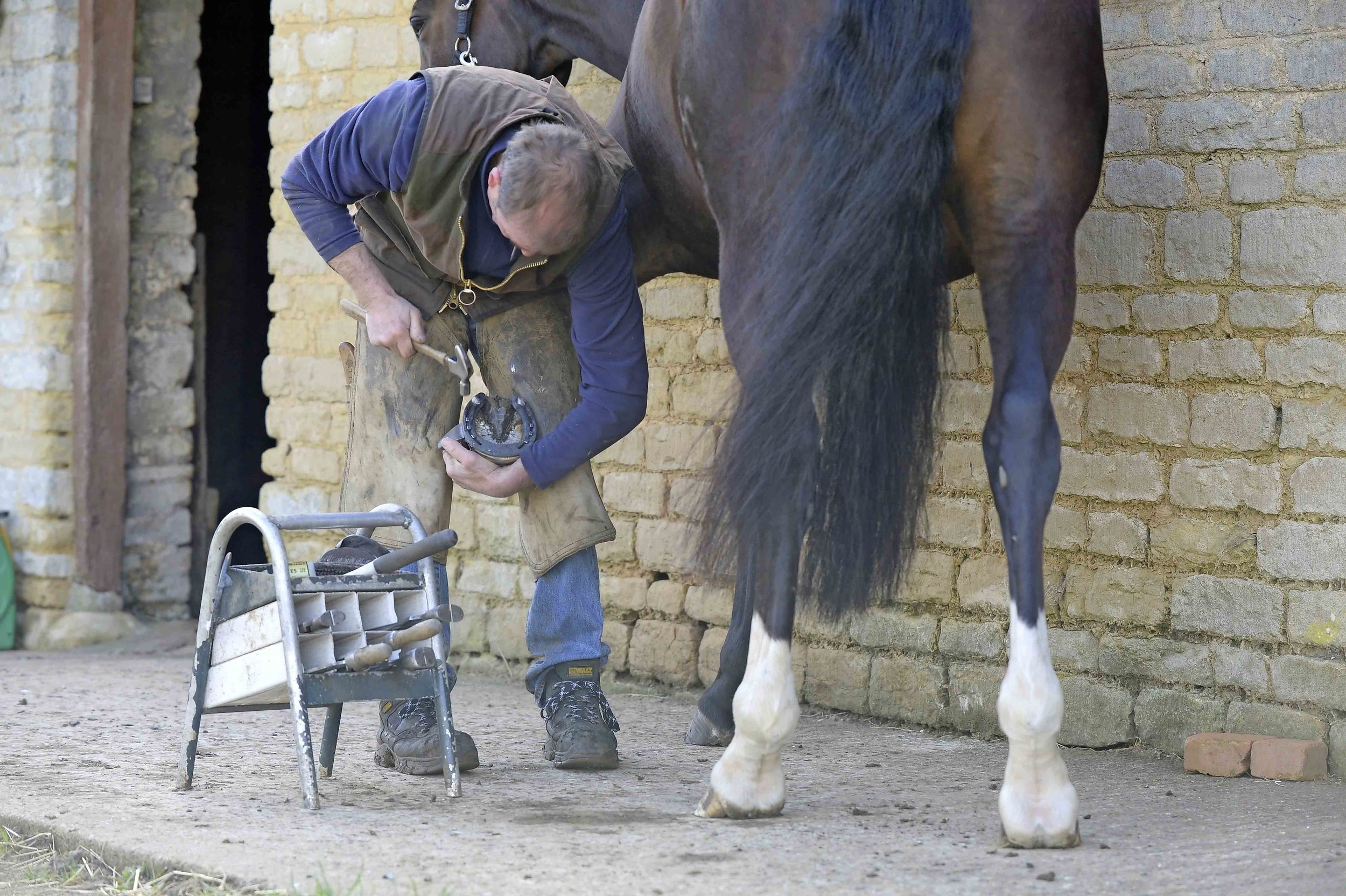 Discuss your horses foot health with your farrier, as he can prevent or spot potential problems