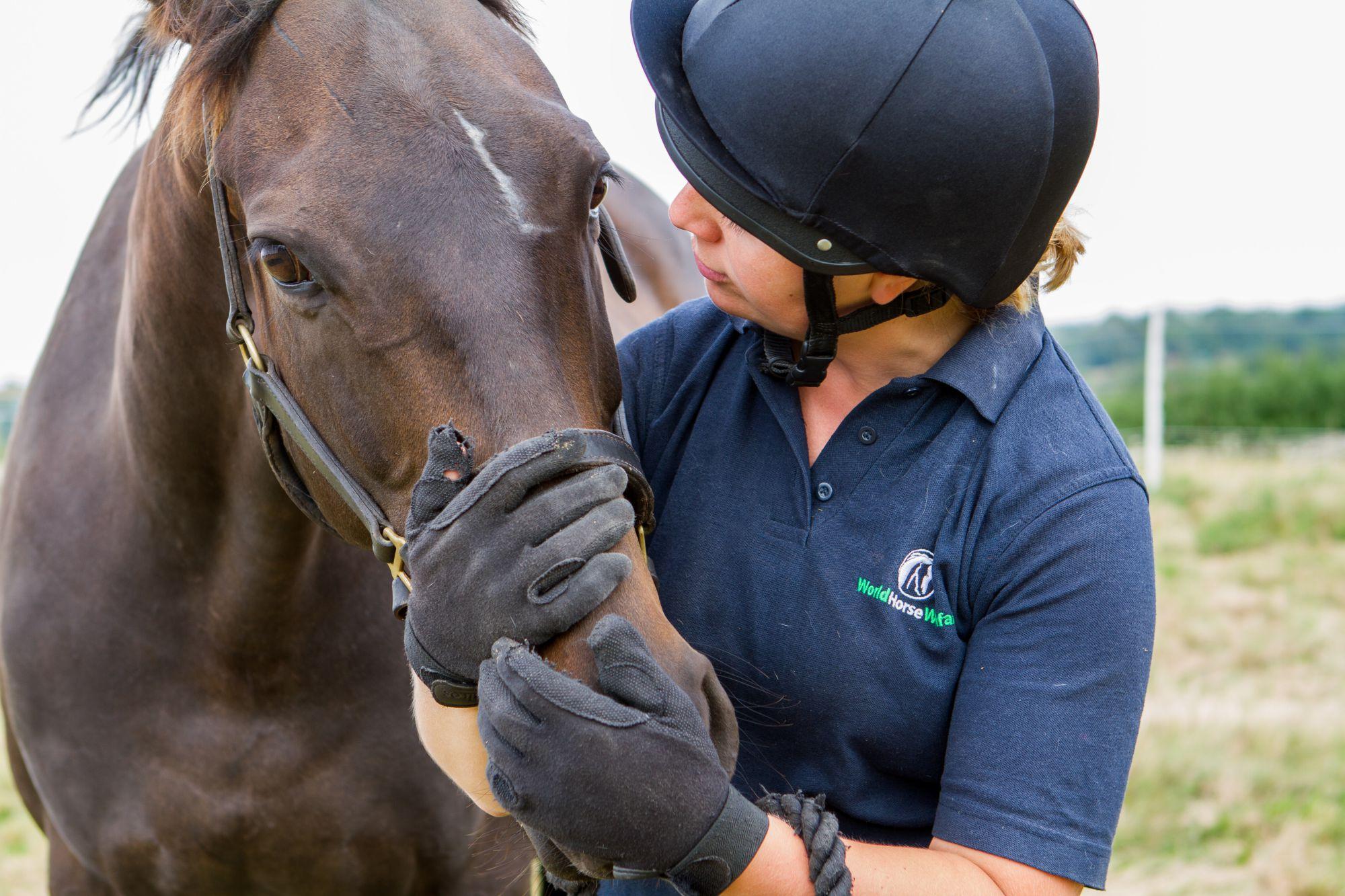 Obi loves cuddles! (Pic: World Horse Welfare)