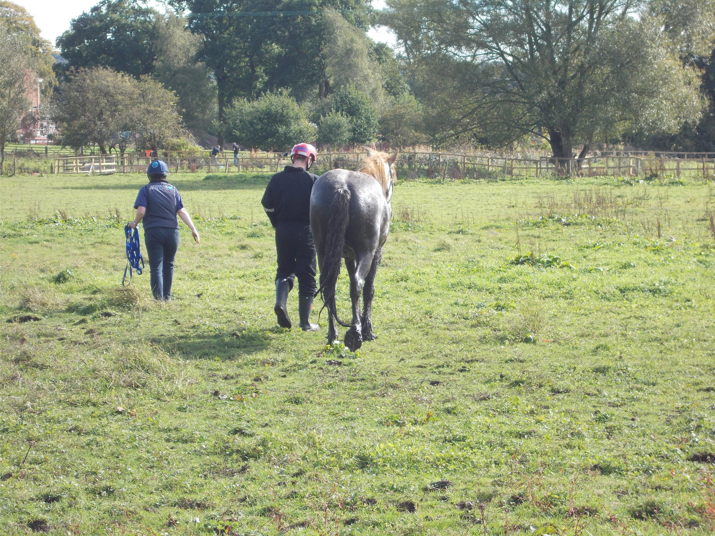 Rescuers helped the horse walk away from the scene (Pic: Cheshire Fire and Rescue Service)