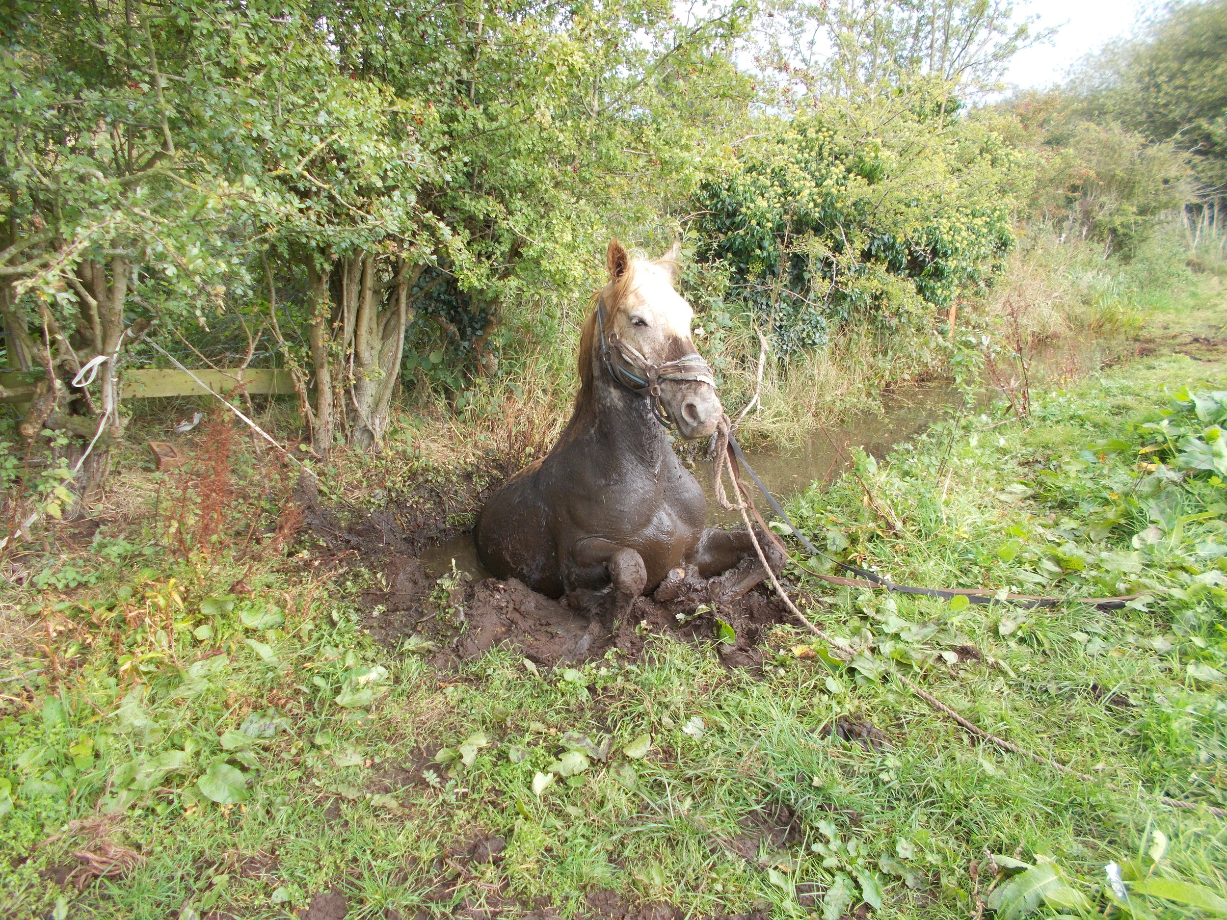 The horse was found stuck in deep mud (Picture: Cheshire Fire and Rescue Service)