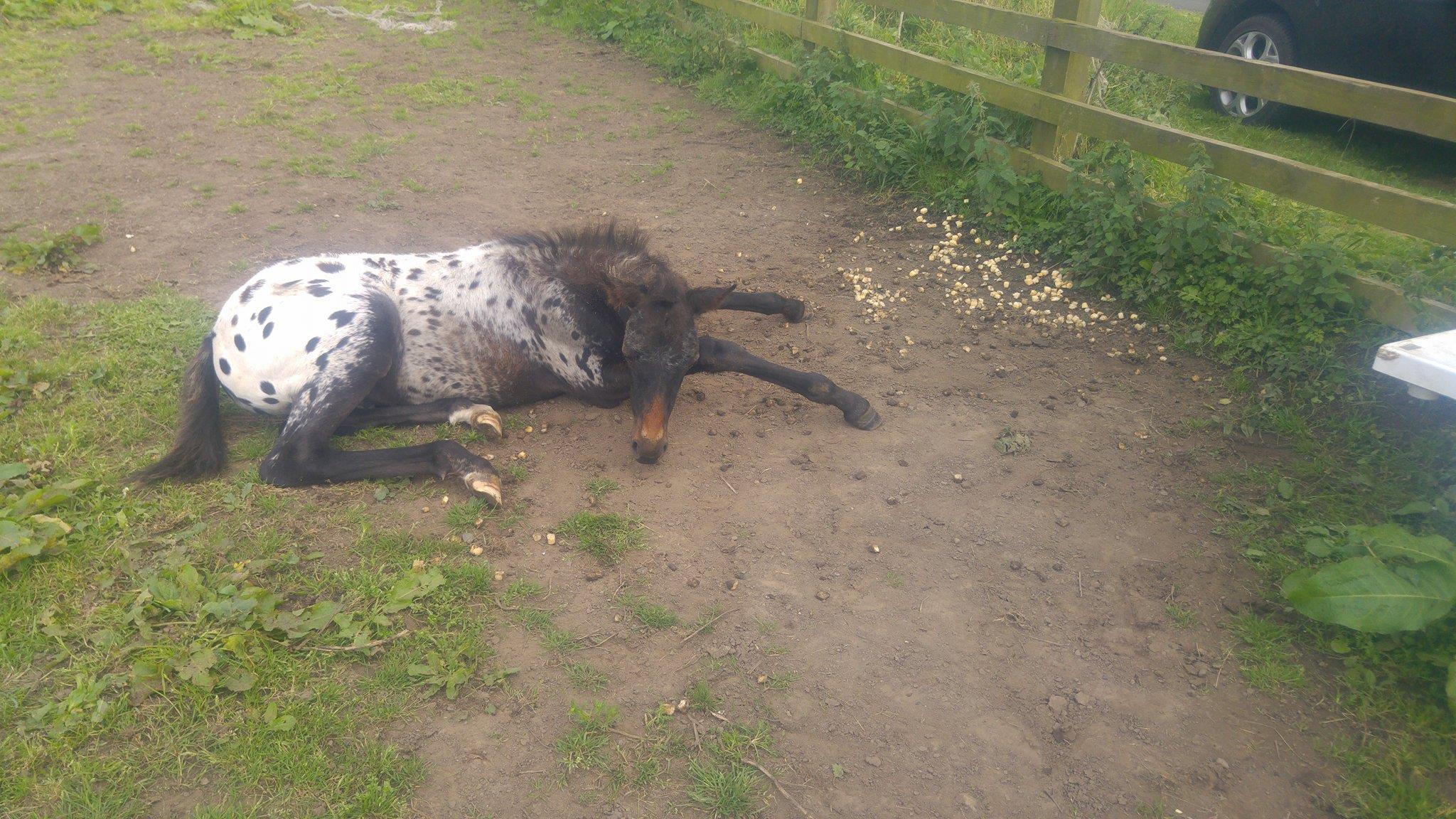 Beyli was found in his field next to diced turnip (Pic: Stephanie Arrowsmith)