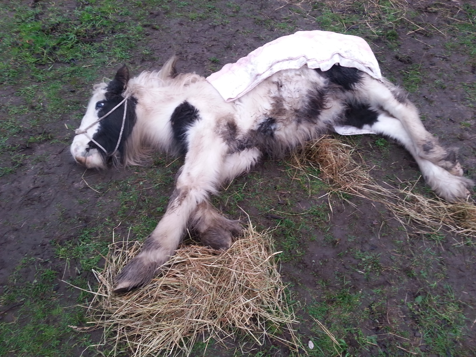 Cruelty like this is unacceptable, as Mr Groves found guilty (Credit: World Horse Welfare)
