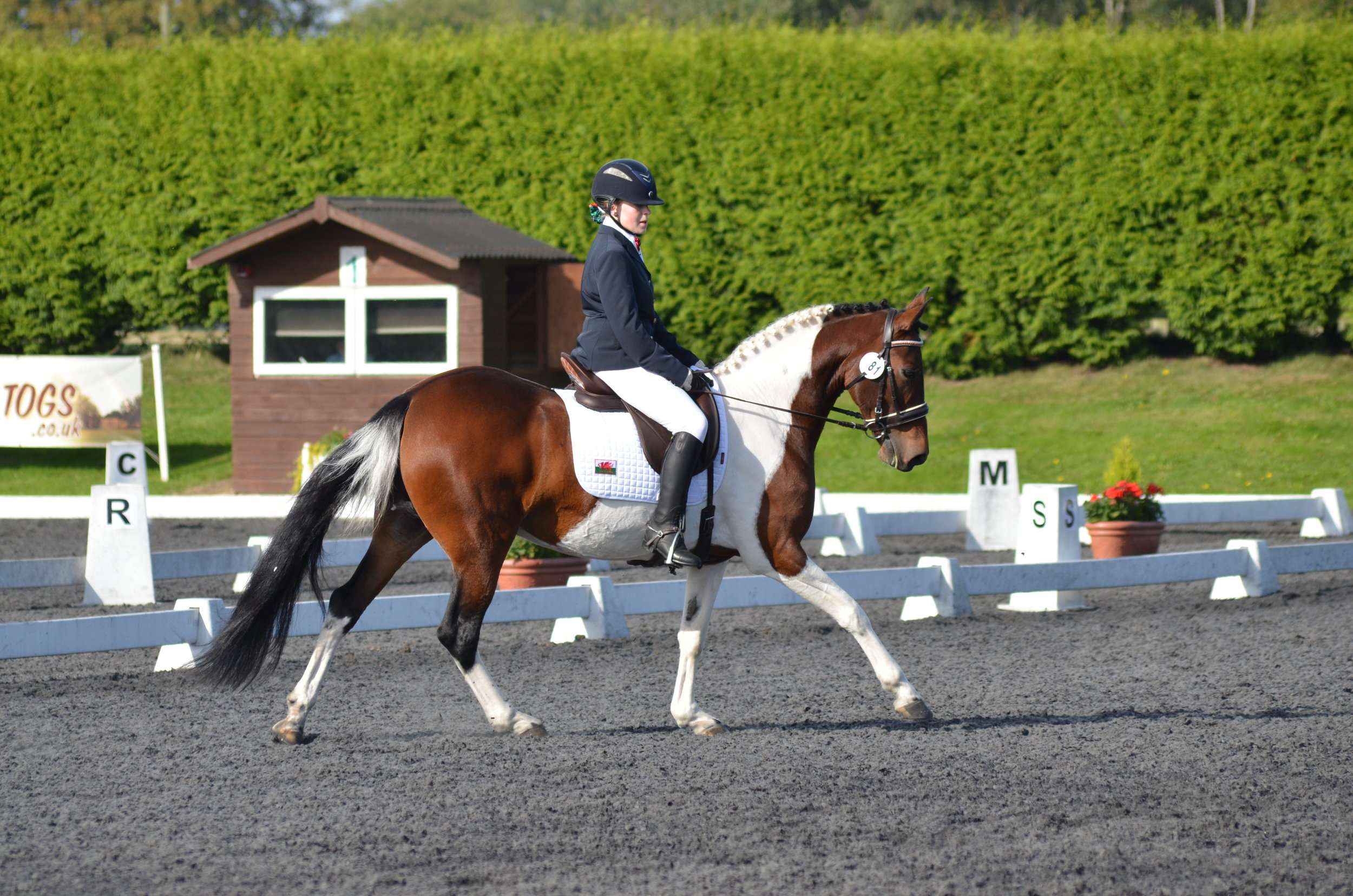 Emily Galtry and Just Mica finished sixth in the Novice Individual Championship (Credit: SHI)