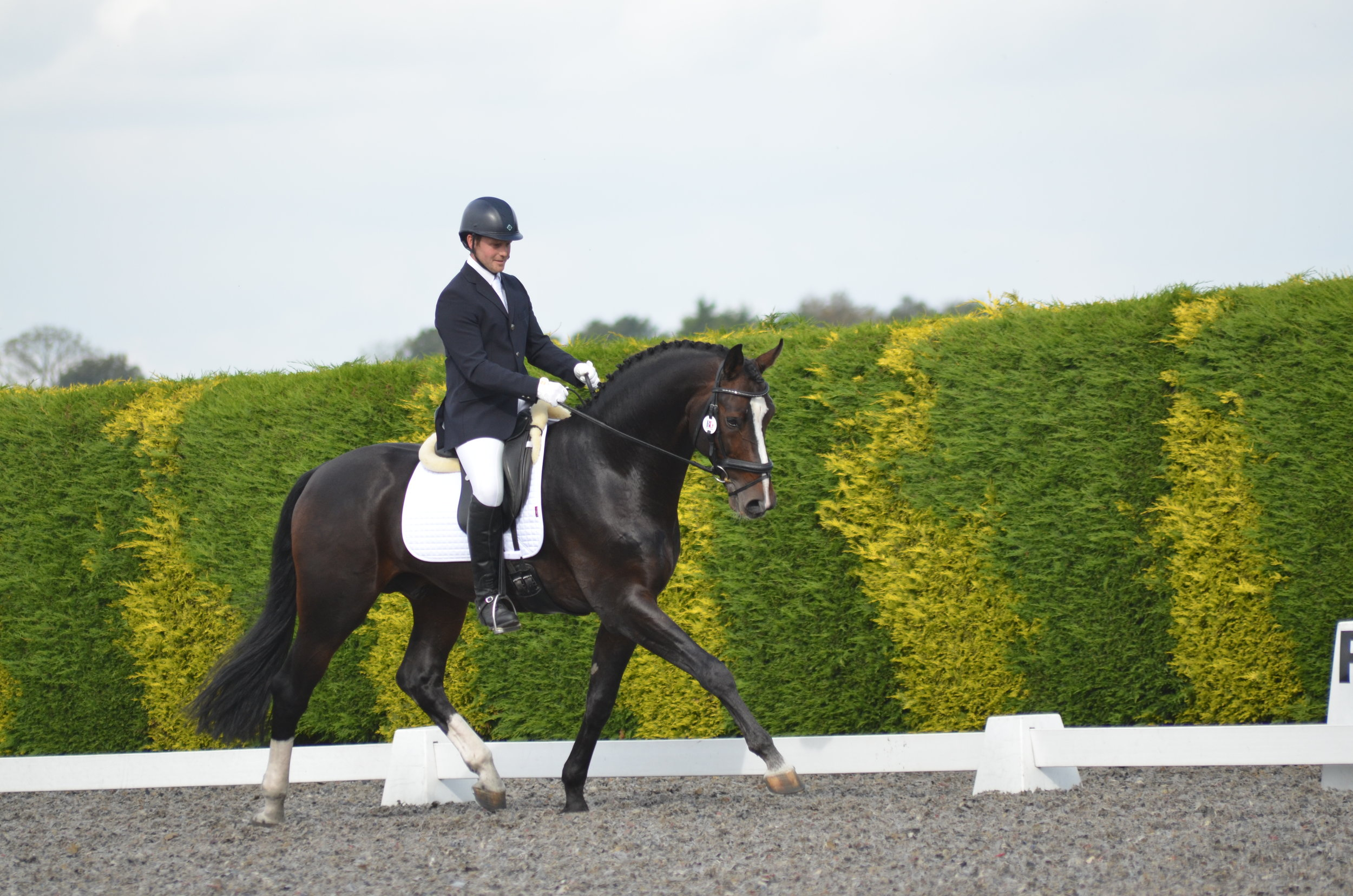 Jason Davies and Sunset Boulevard were awarded ninth in the Elementary Individual Championship (Credit: SHI)